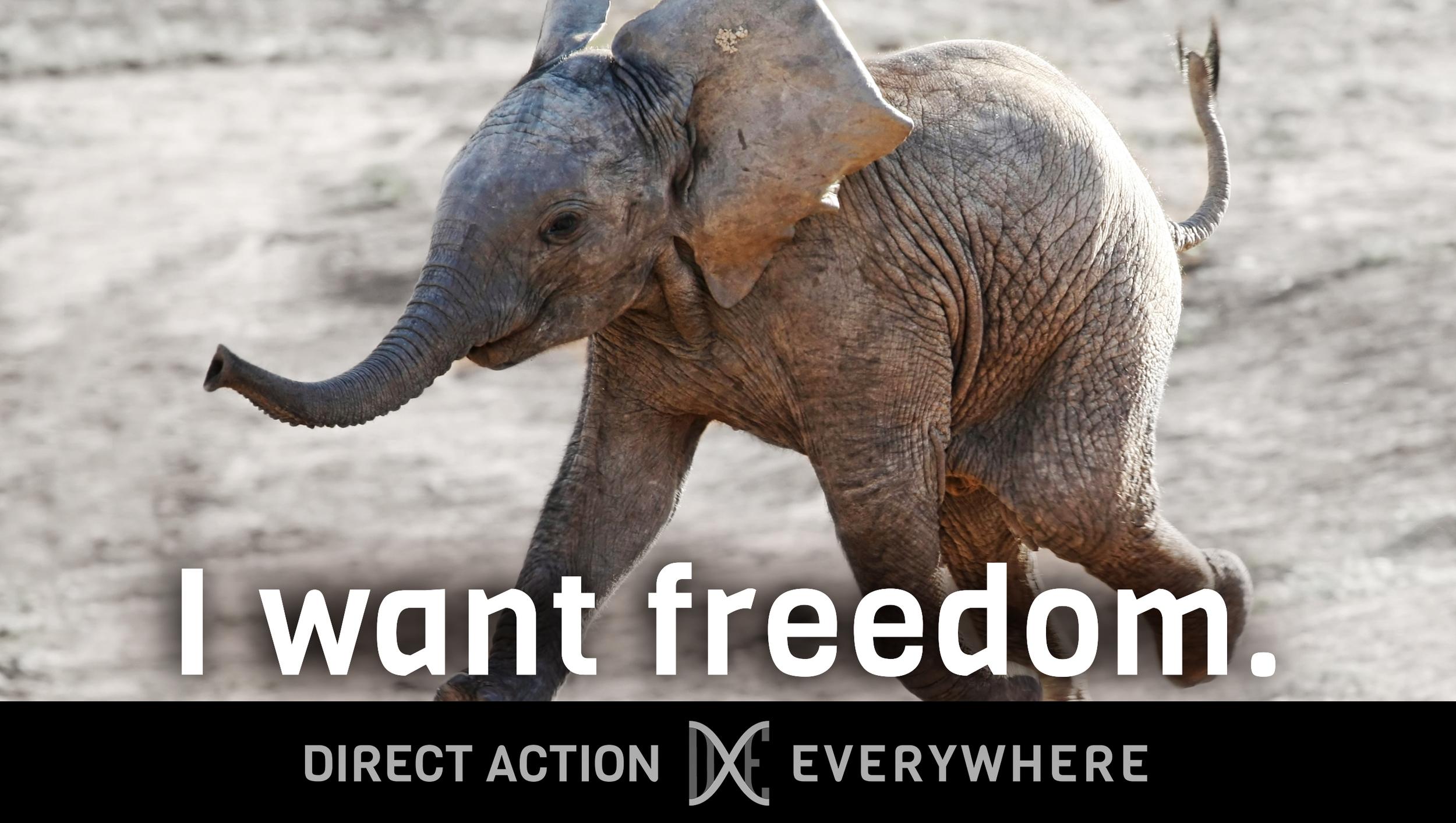 iwantfreedom_elephantbaby.jpg