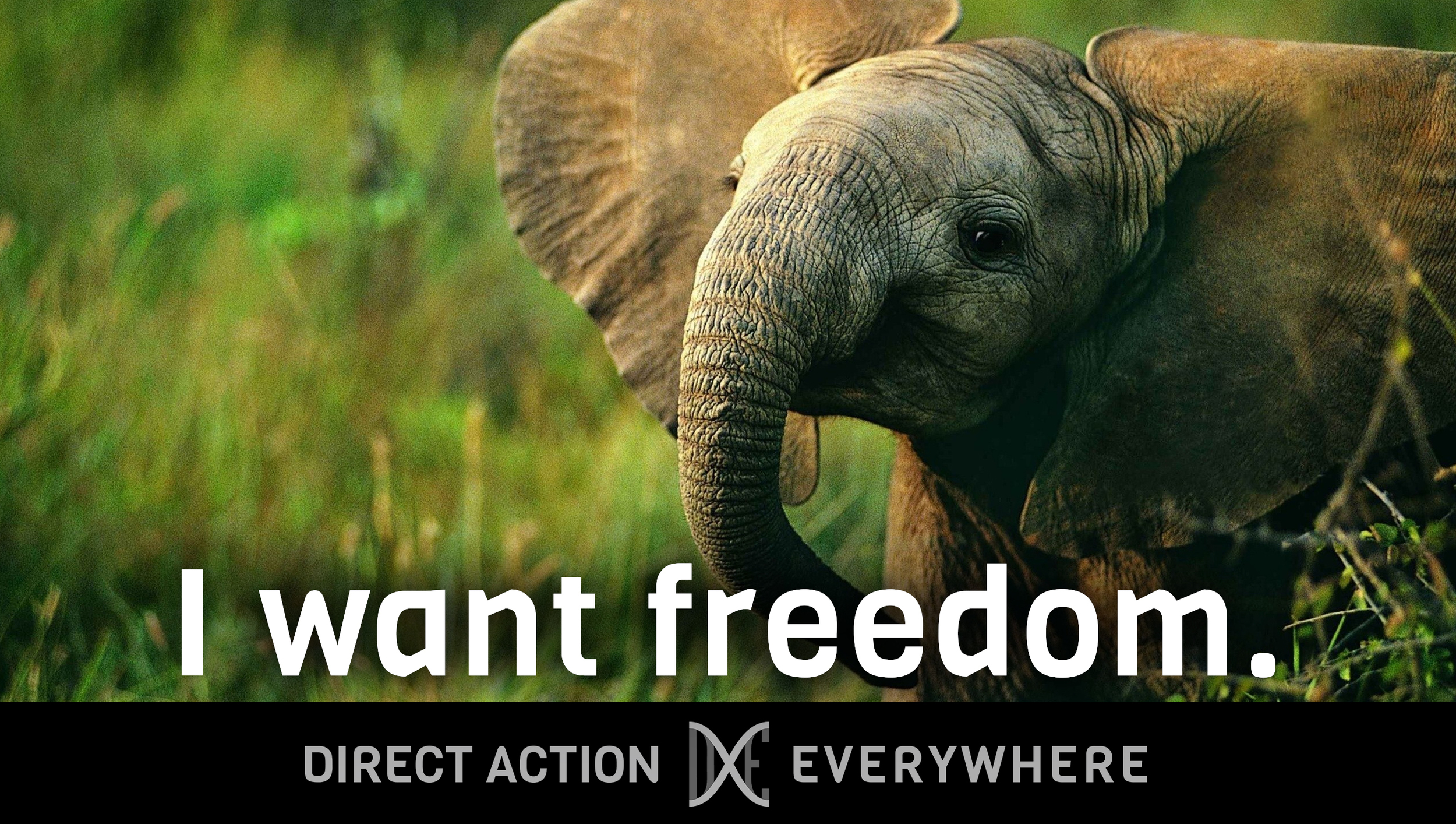 iwantfreedom_elephantbaby2.jpg
