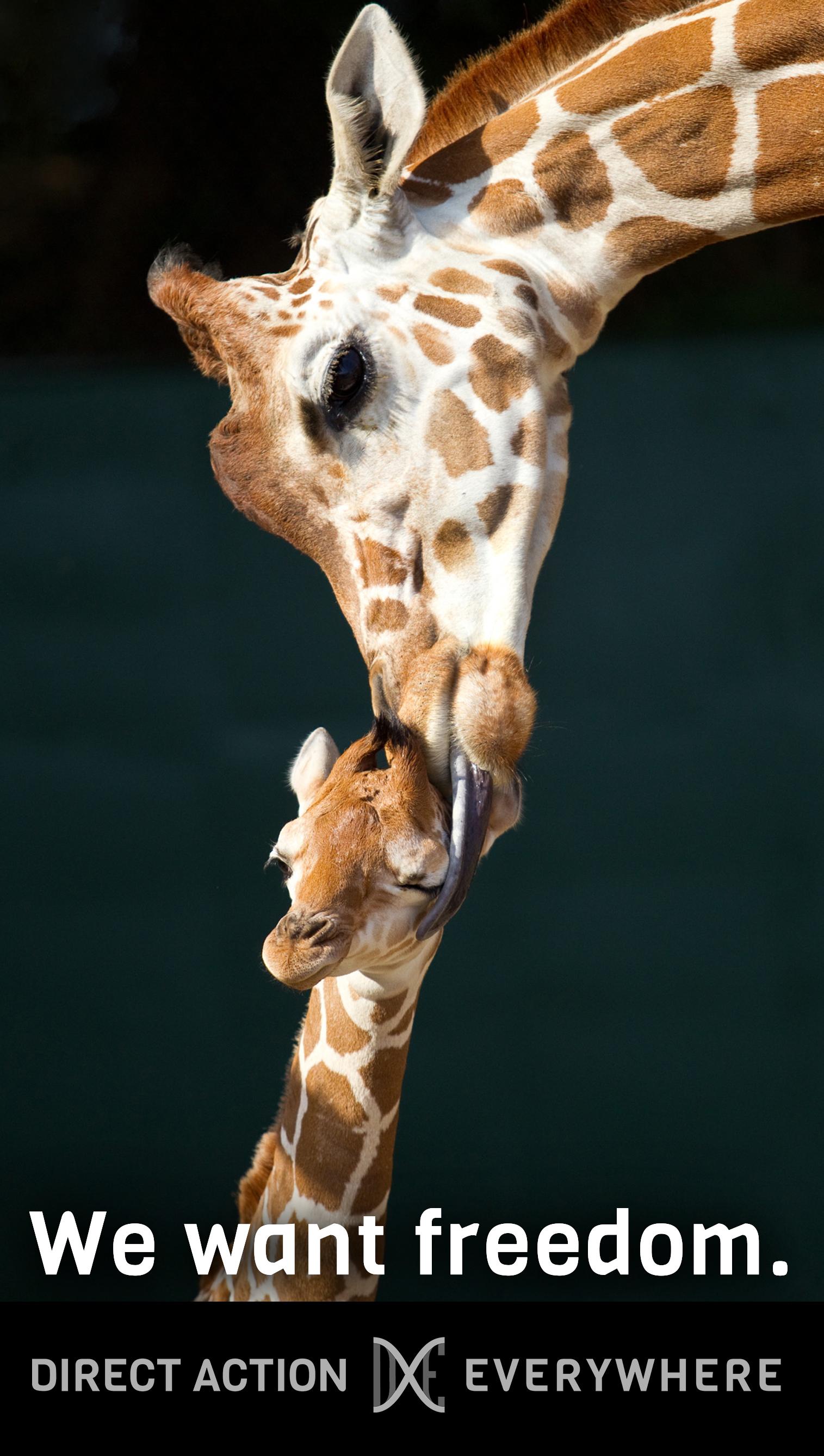 iwantfreedom_giraffes.jpg