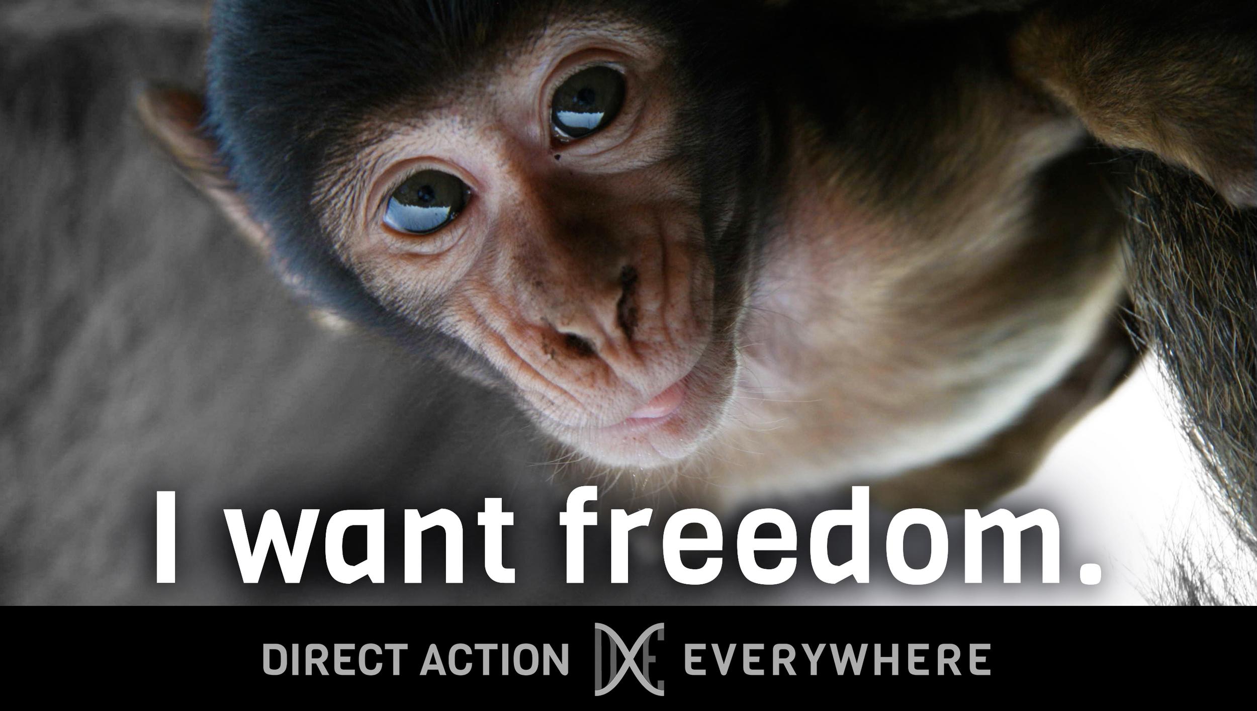 iwantfreedom_monkey.jpg
