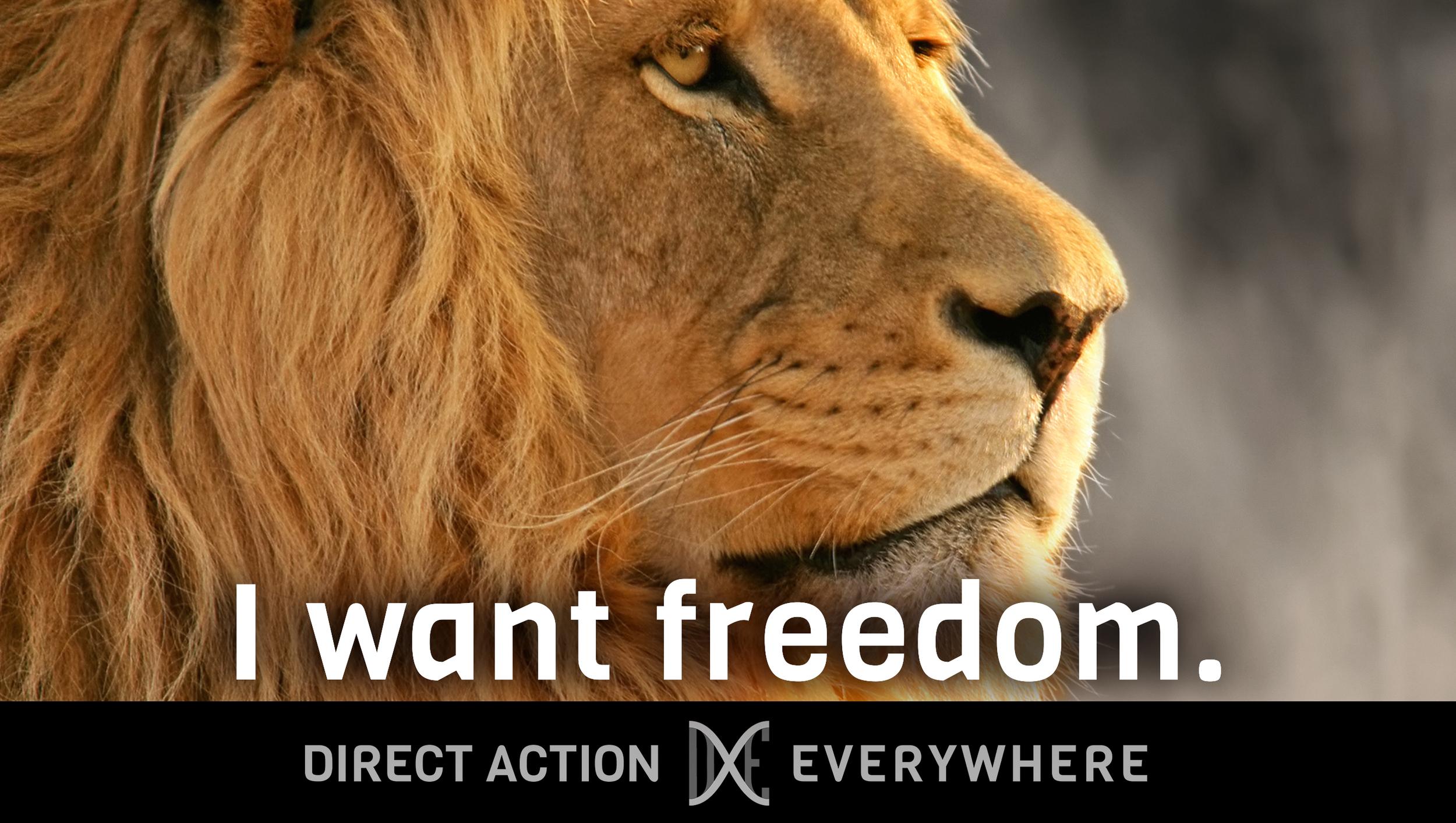 iwantfreedom_lion.jpg