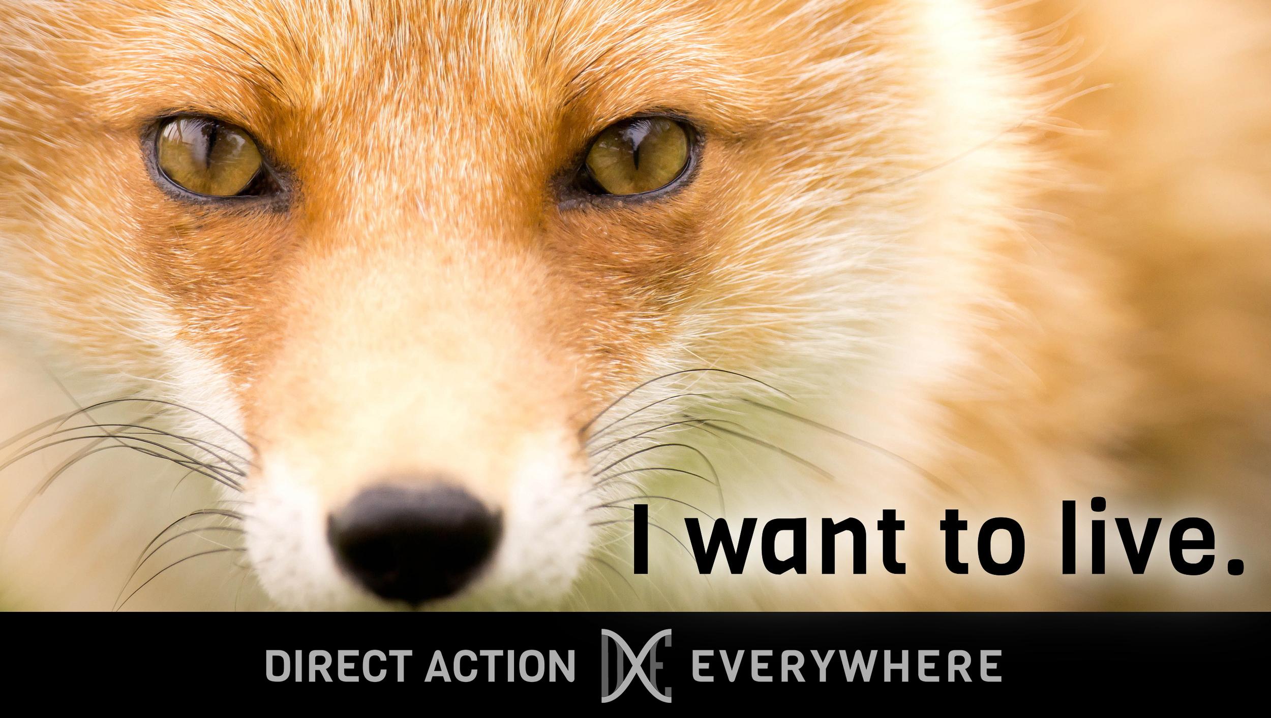 iwanttolive_fox2.jpg