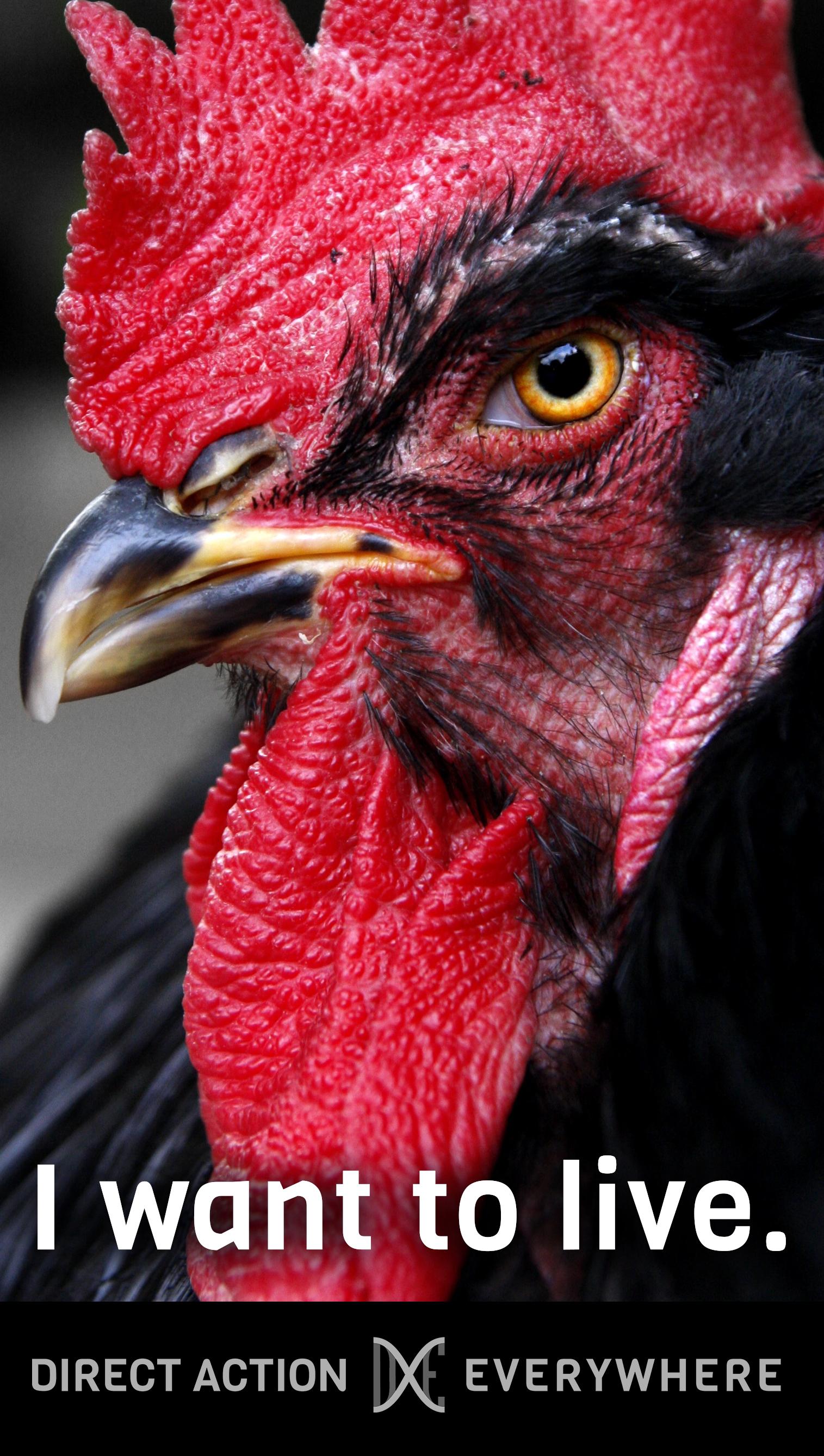 iwanttolive_chicken2.jpg