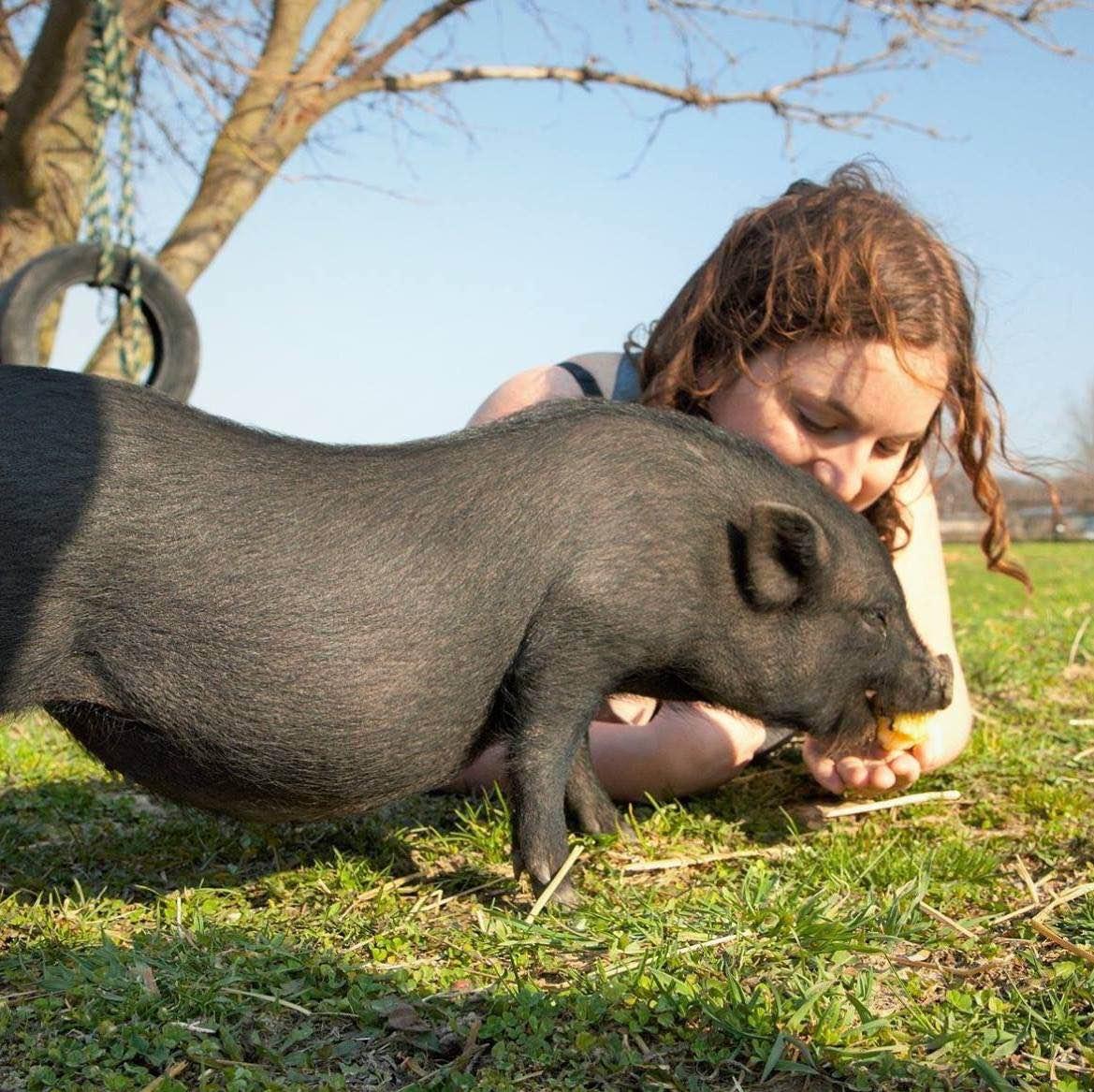 Activist Eva Hamer hanging out with a pig friend