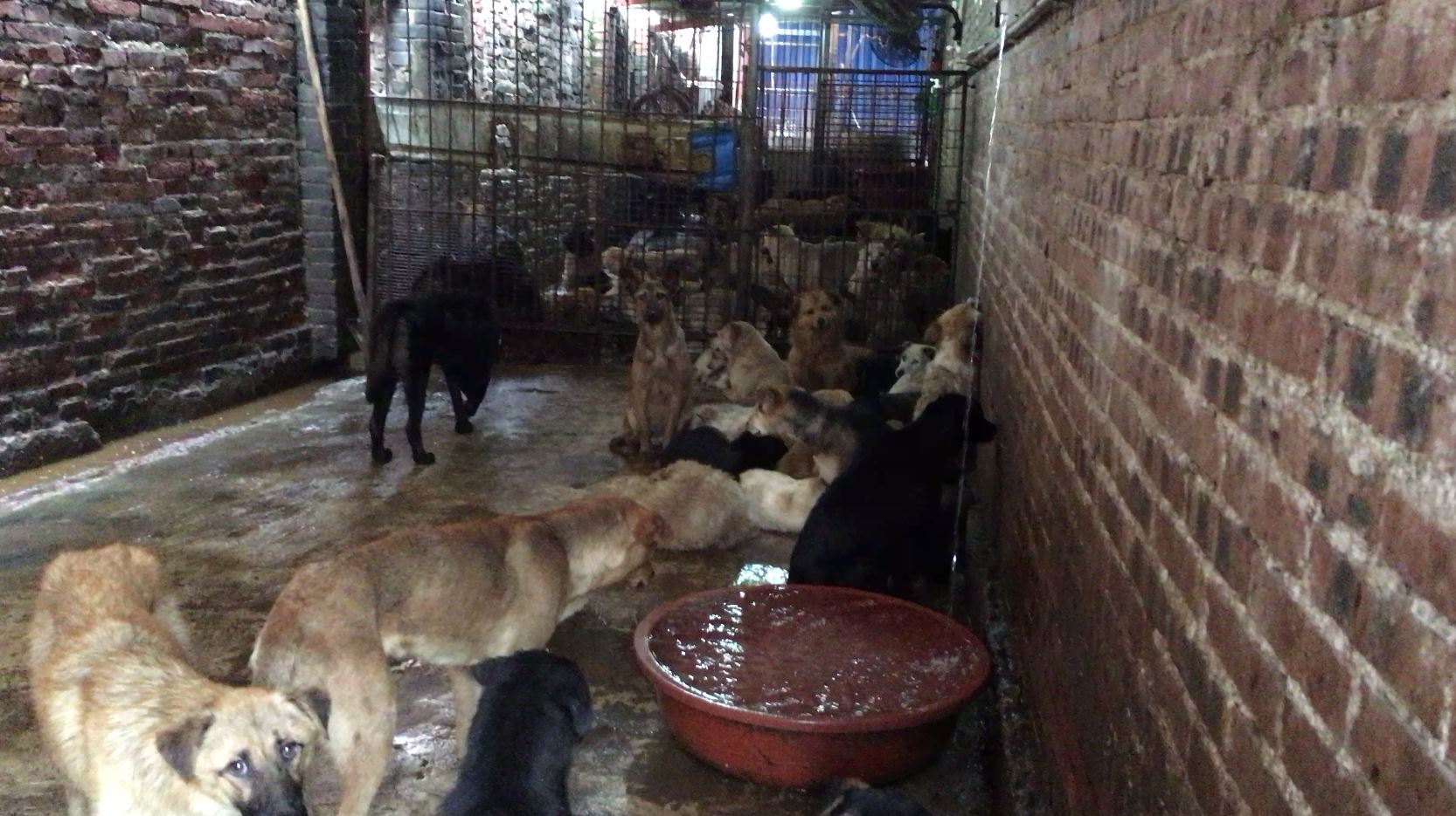 Dogs are kept in filthy conditions, many sick and in desperate need of veterinary care.