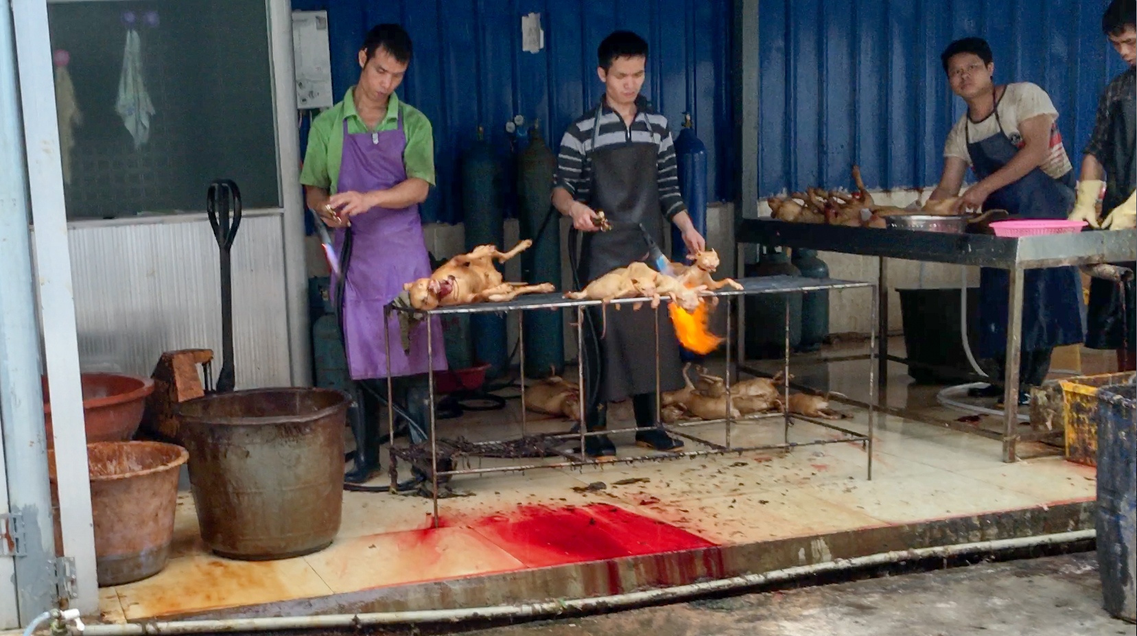 As people roast the bodies of dogs and cats, blood flows right underneath the table.