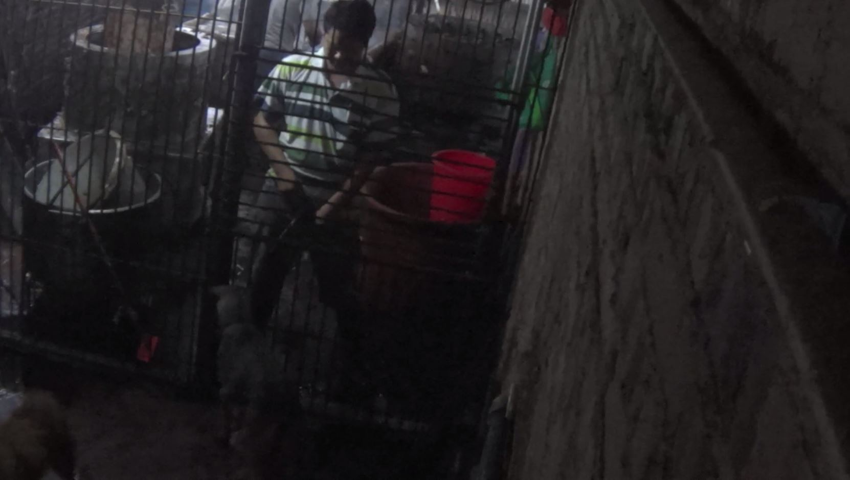 Workers treat the dogs with little respect. Here a man urinates on a dog through the cage.