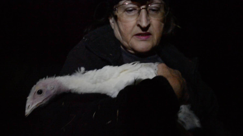 Rescuer Diane Sorbi with Helen, a hen  rescued from Diestel Turkey Ranch .