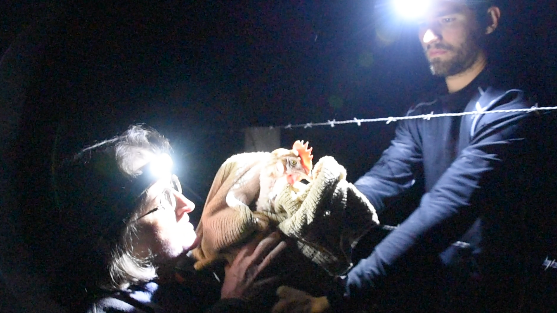 DxE animal rights activist Jason Oliver passes injured hen through fence to activist Diane Gandee Sorbi, so she can be taken to a vet.
