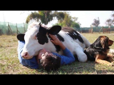 cuddling a cow.jpg
