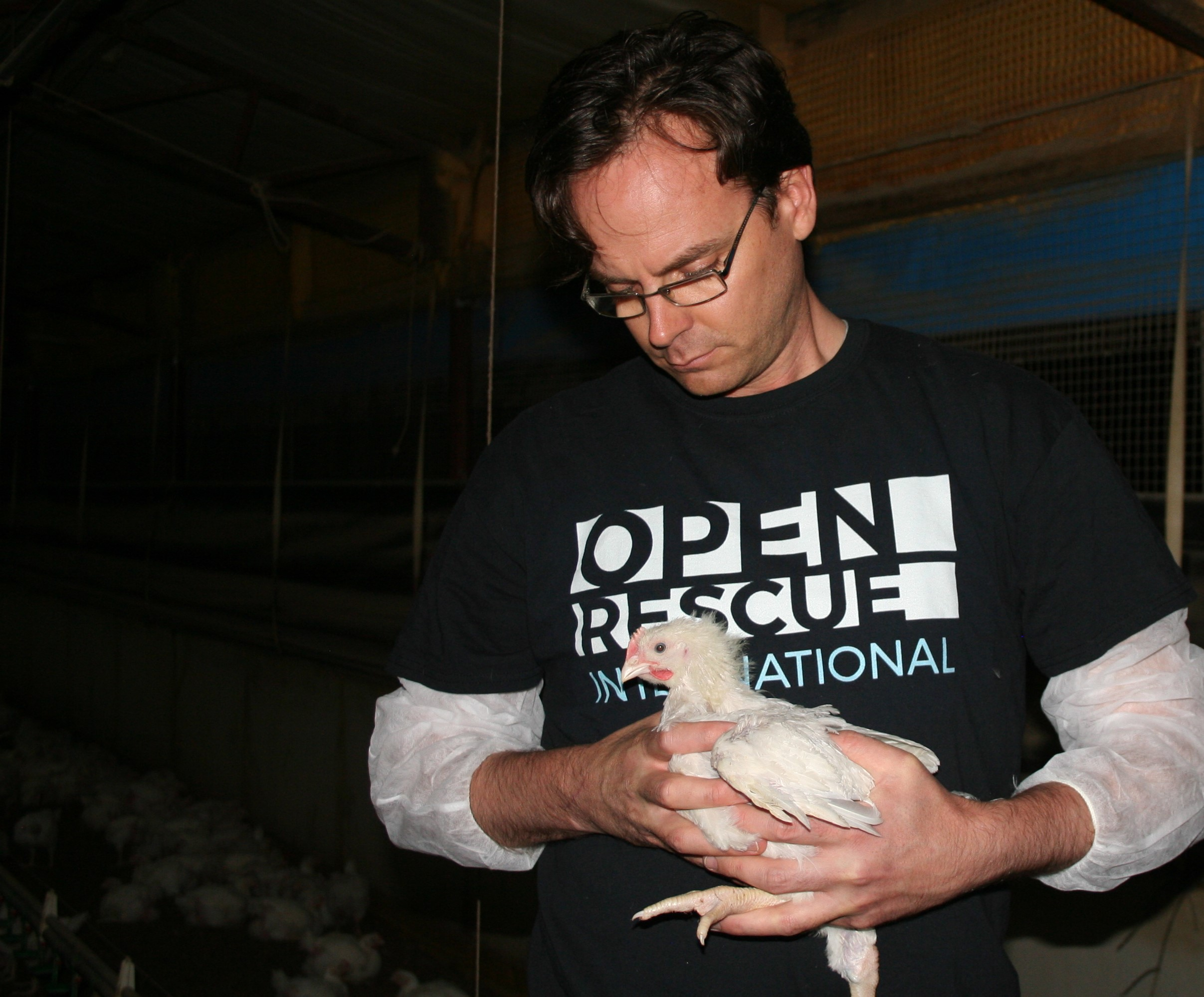 An activist from Animal Liberation Victoria in Australia rescues a young chick