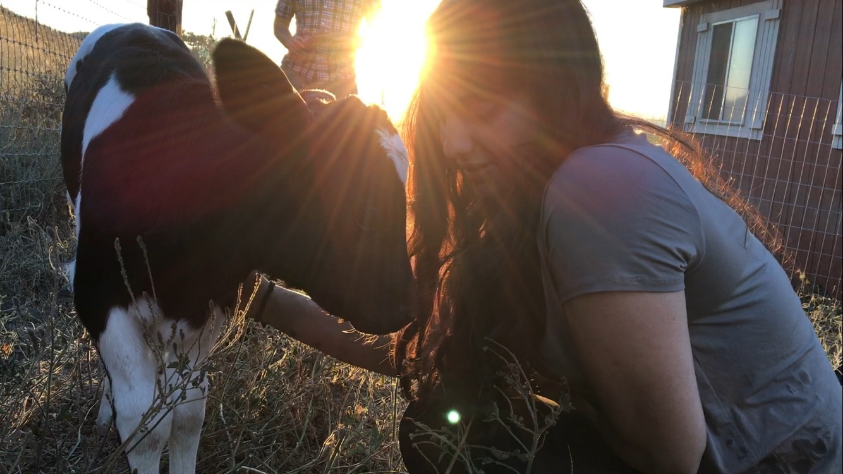 DxE organizer Priya Sawhney with Roselynn, shining light on her new life and a growing movement for animal liberation.