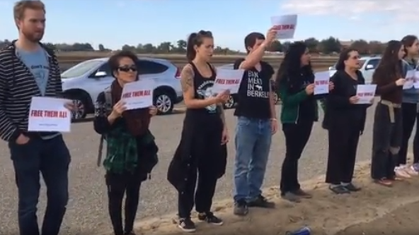 Animal rights activists protest at a Laton dairy - November 14, 2017The Fresno Bee