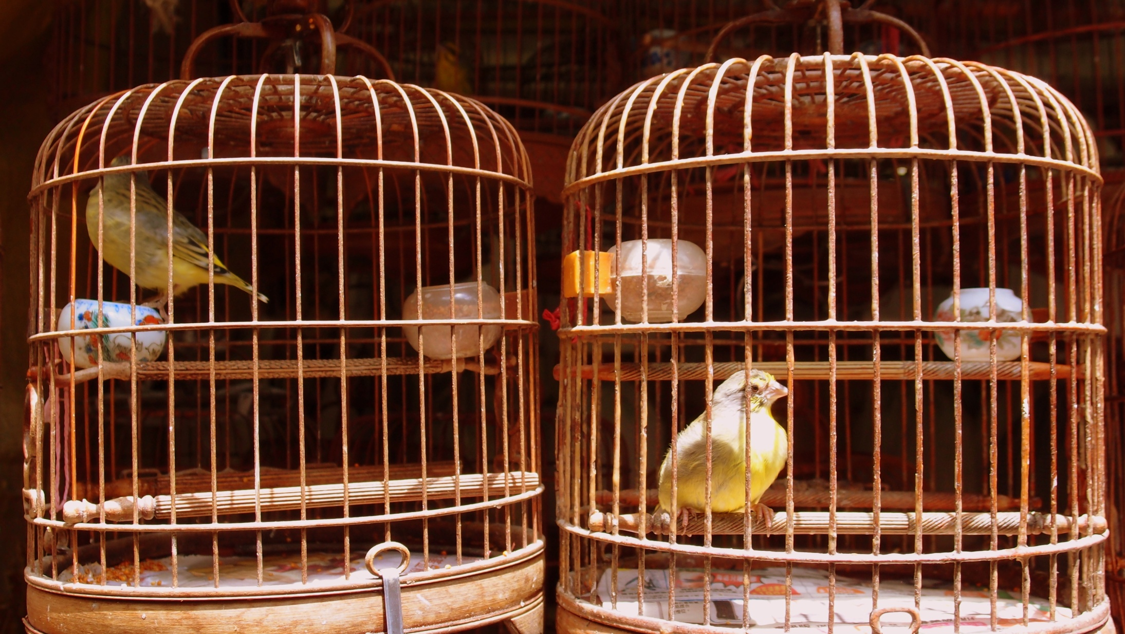 Small birds in big cages = expensive