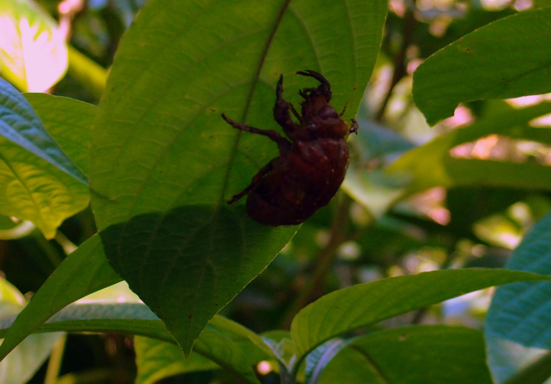 Bug 1 at the Peak