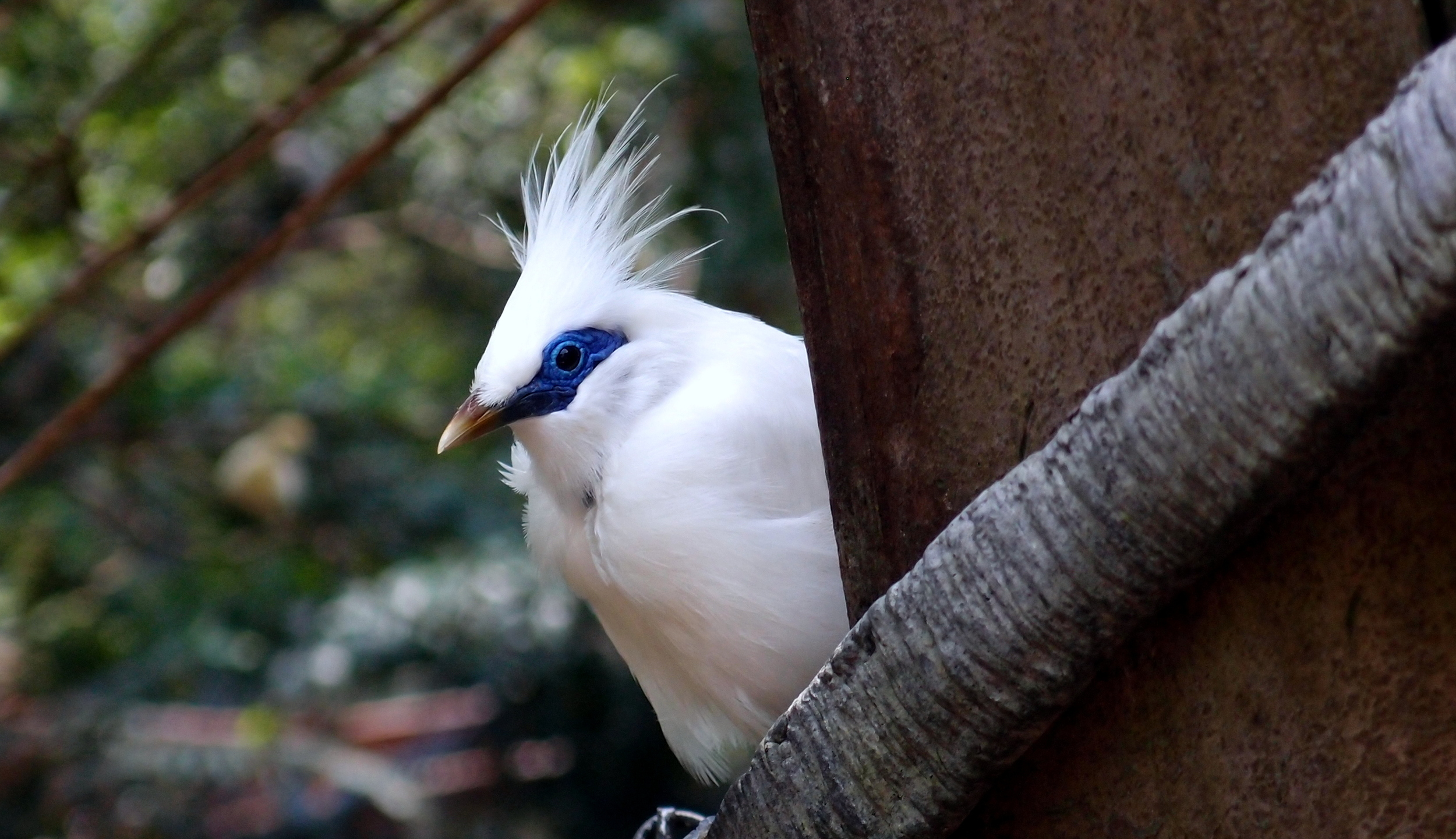 What a lovely bird