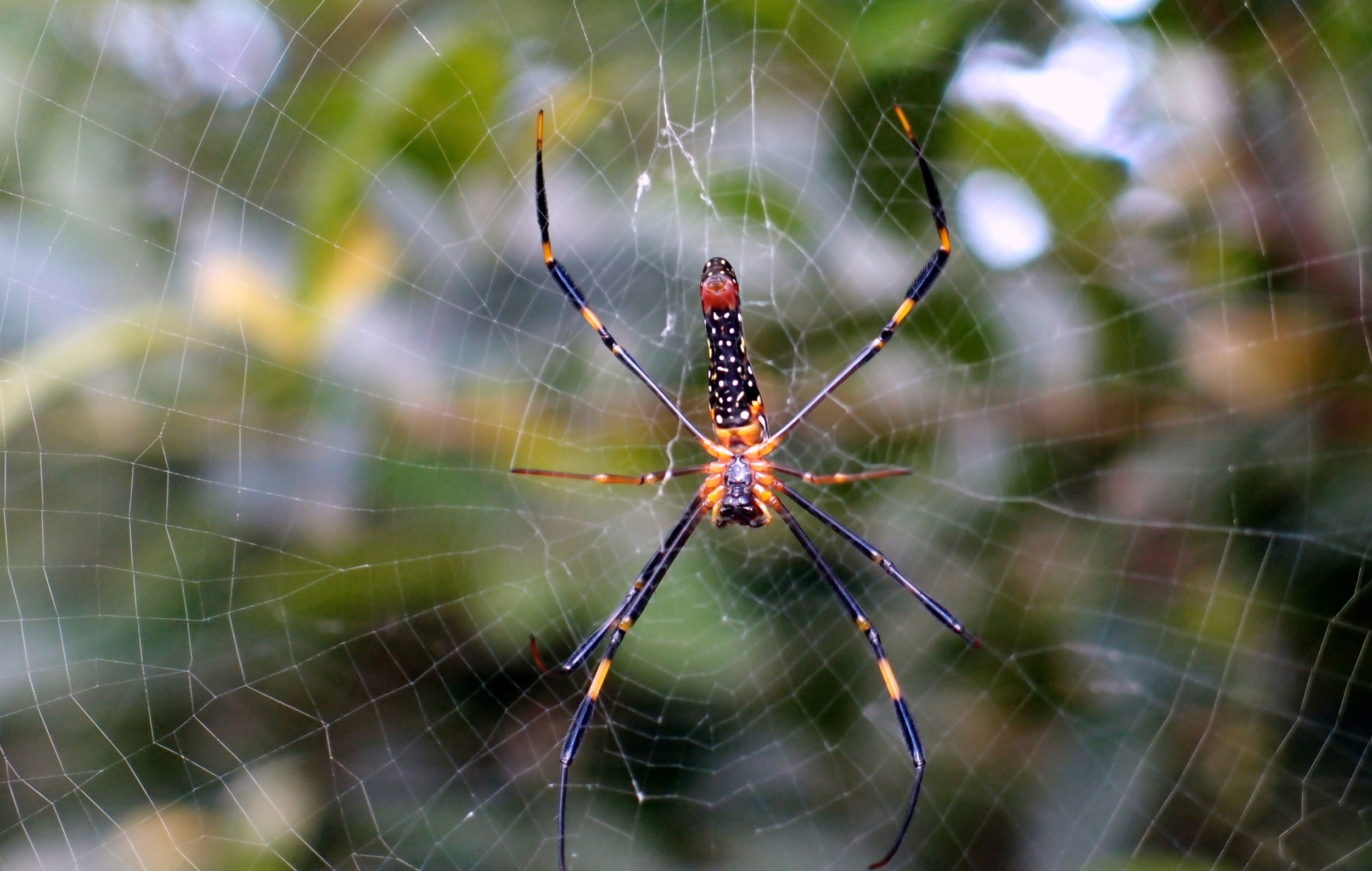 They produce a gigantic web