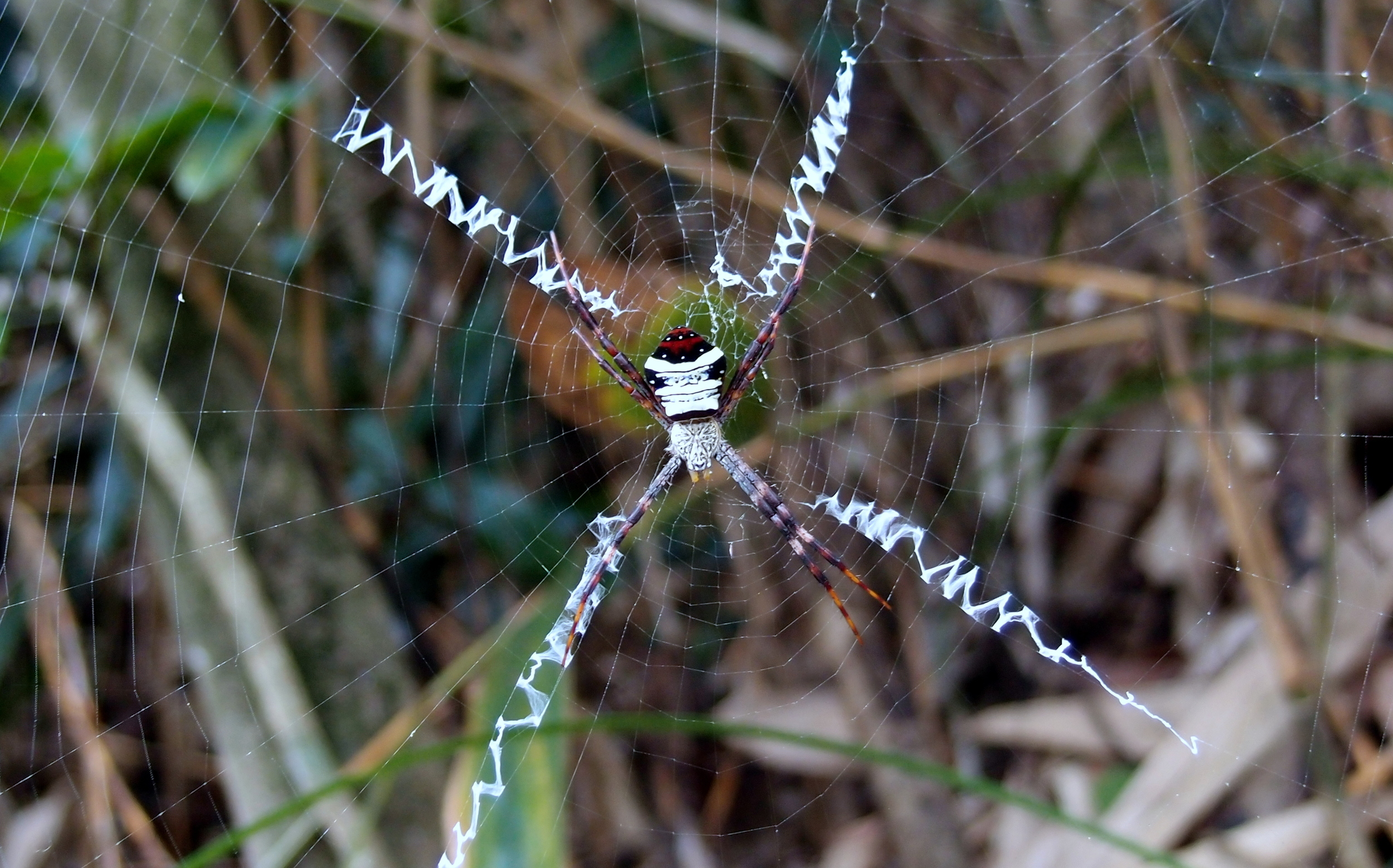 ... and what an amazing web