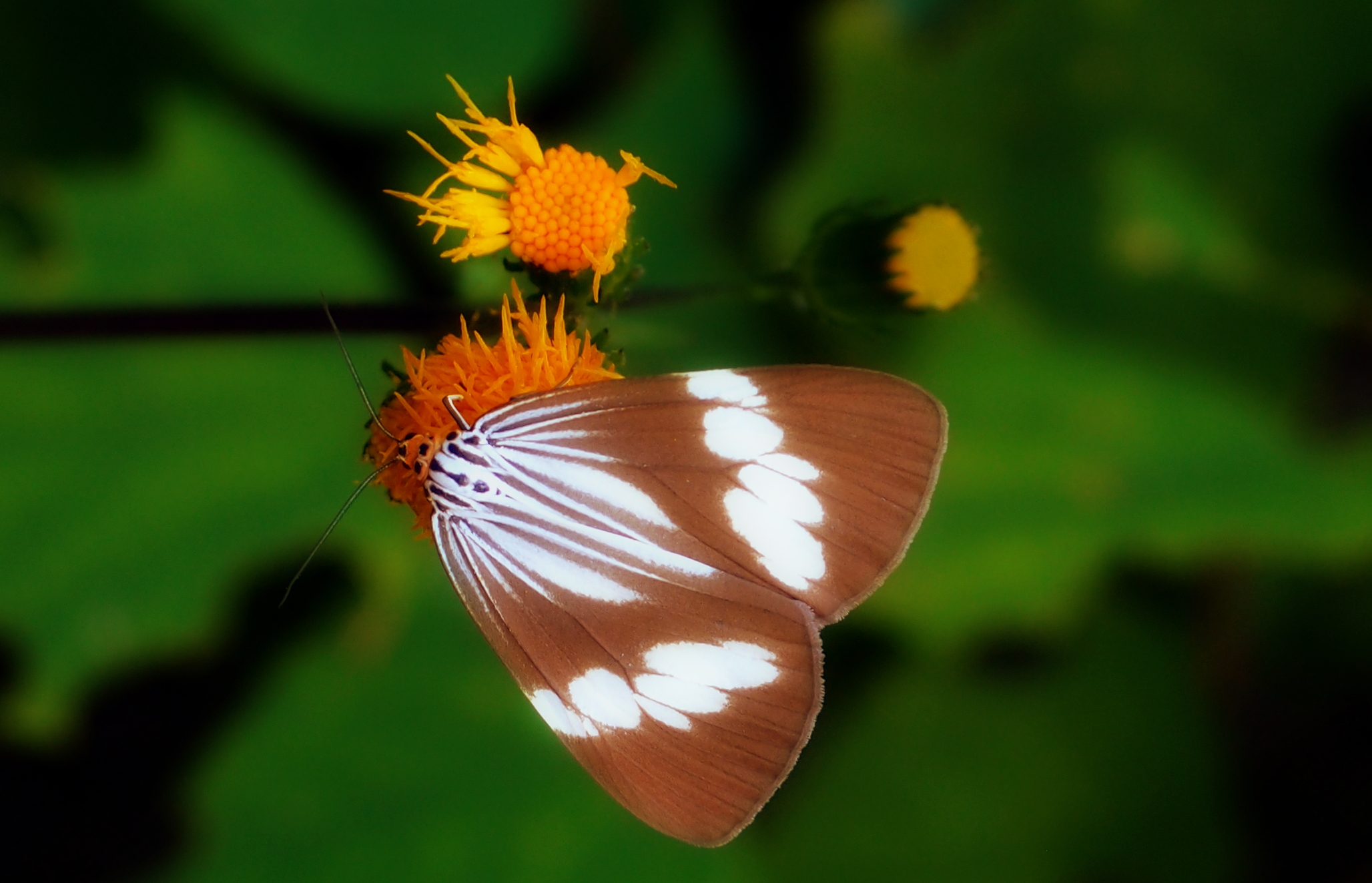 Same butterfly different angle