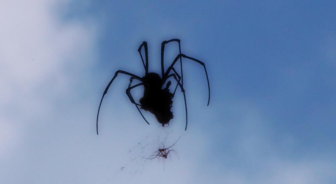 Spider munching on something.....