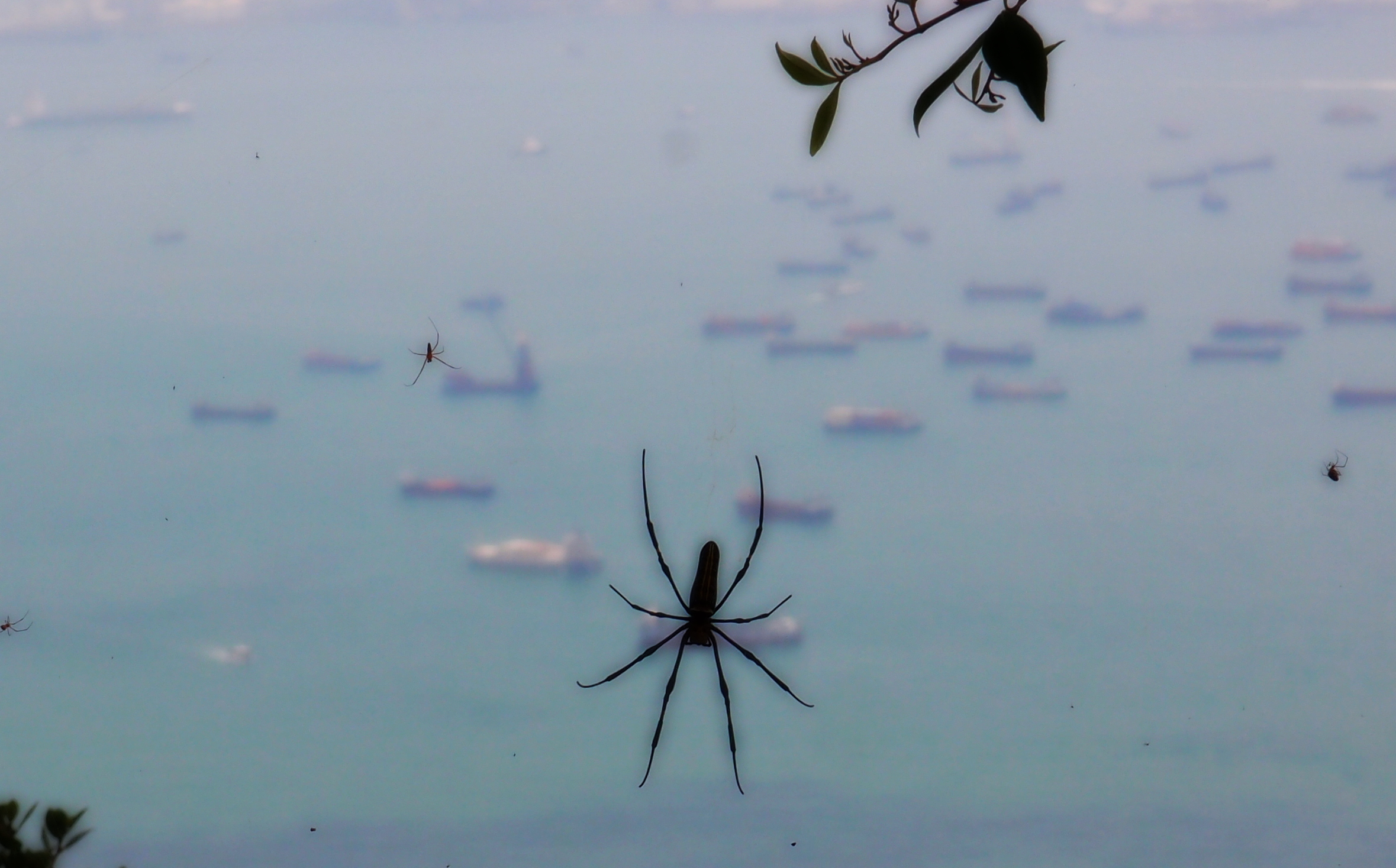Spider hanging out - the other 3 spiders just show you how big the web is!