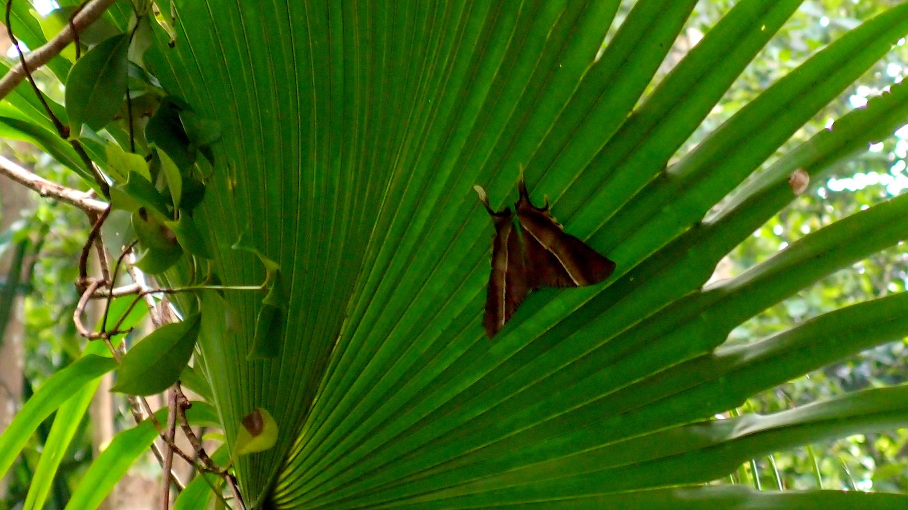 A bloody great big moth