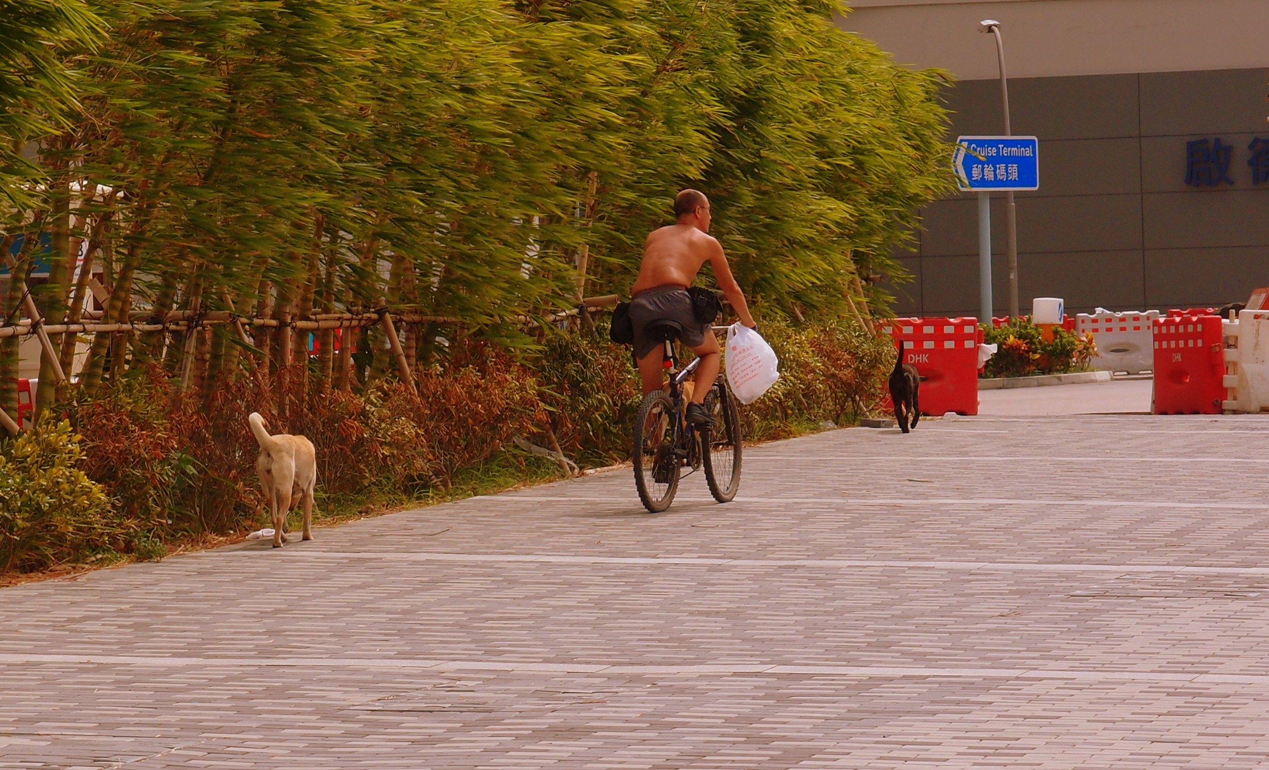 They then chased this bloke on a bike