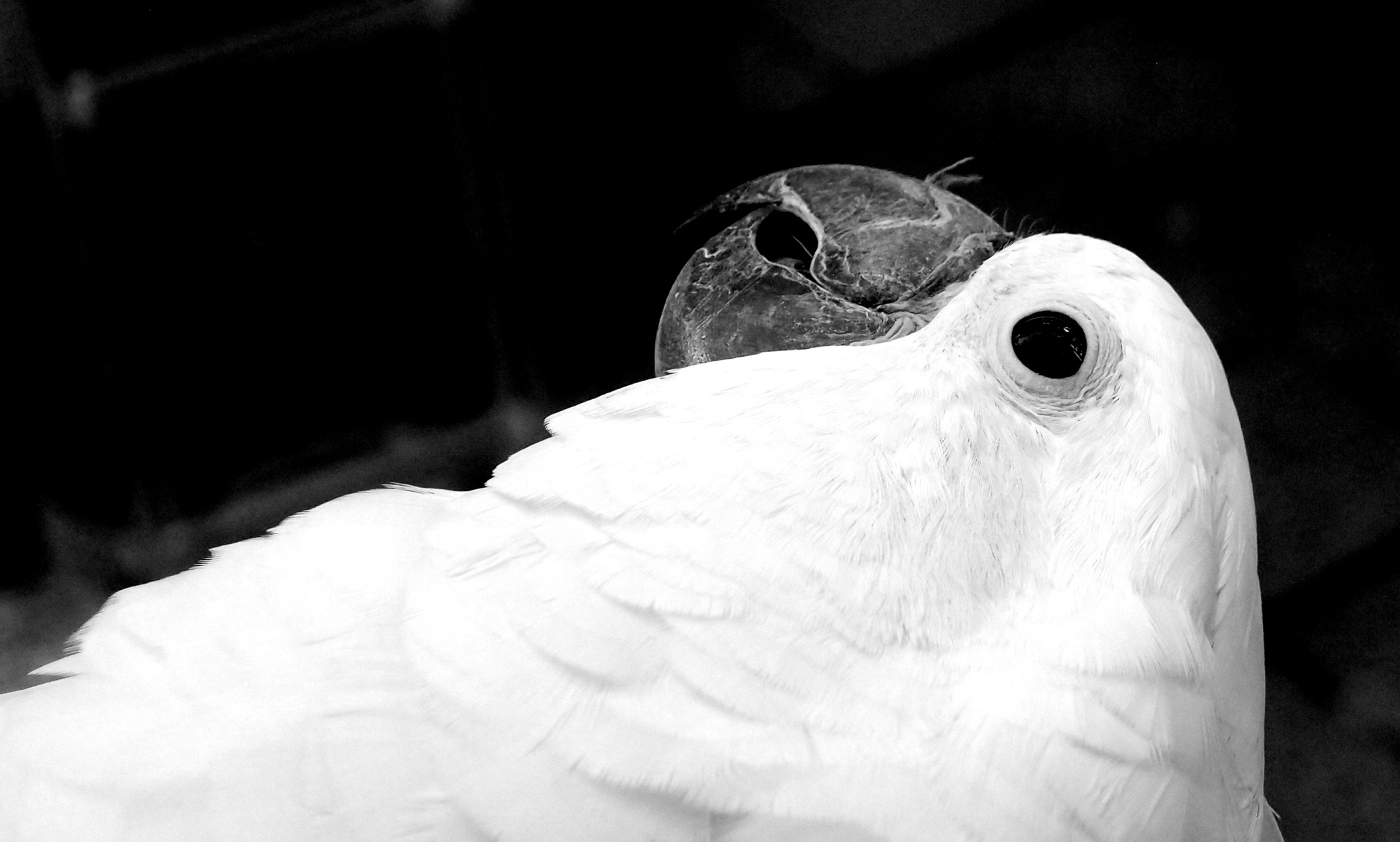 The creepy birds at the Yuen Po Street Bird Market