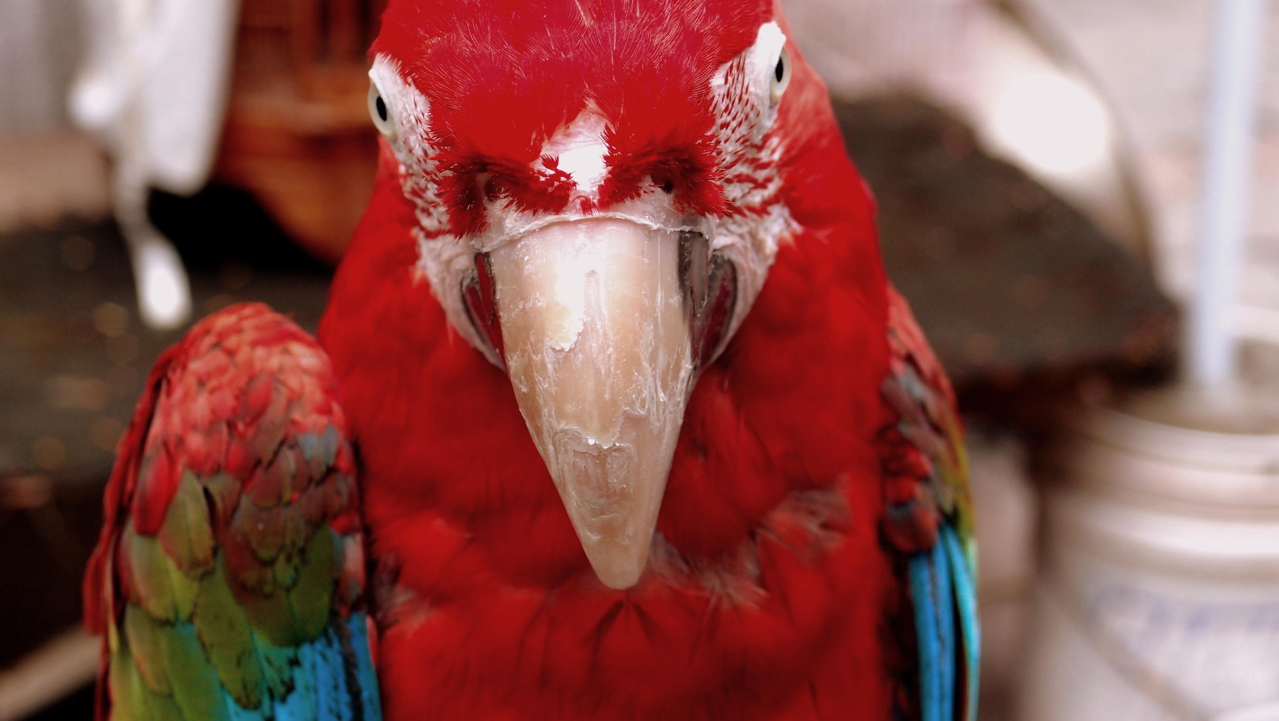 A very spooky bird at the Bird Market.