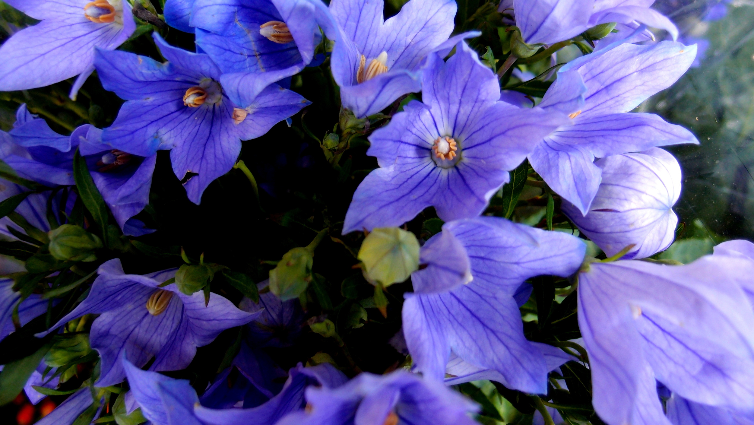 A lovely bunch of flowers (yeah, I know.. I'm scraping the barrel on this one)