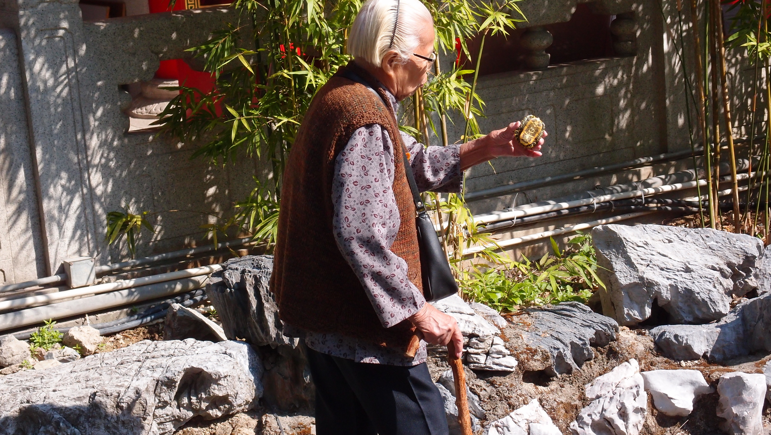 An old biddy torments a turtle at the Sik Sik Yuen Wong Tai Sin Temple - it is one thing to chuck coins at them it is quite another to wave them around!