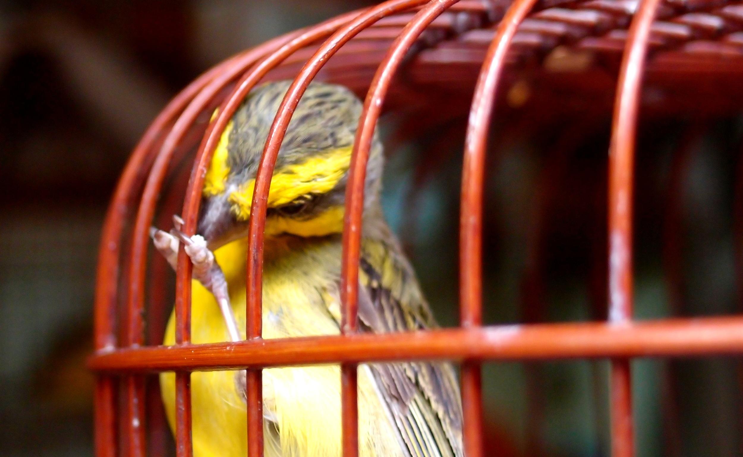 The Bird Market, Mongkok