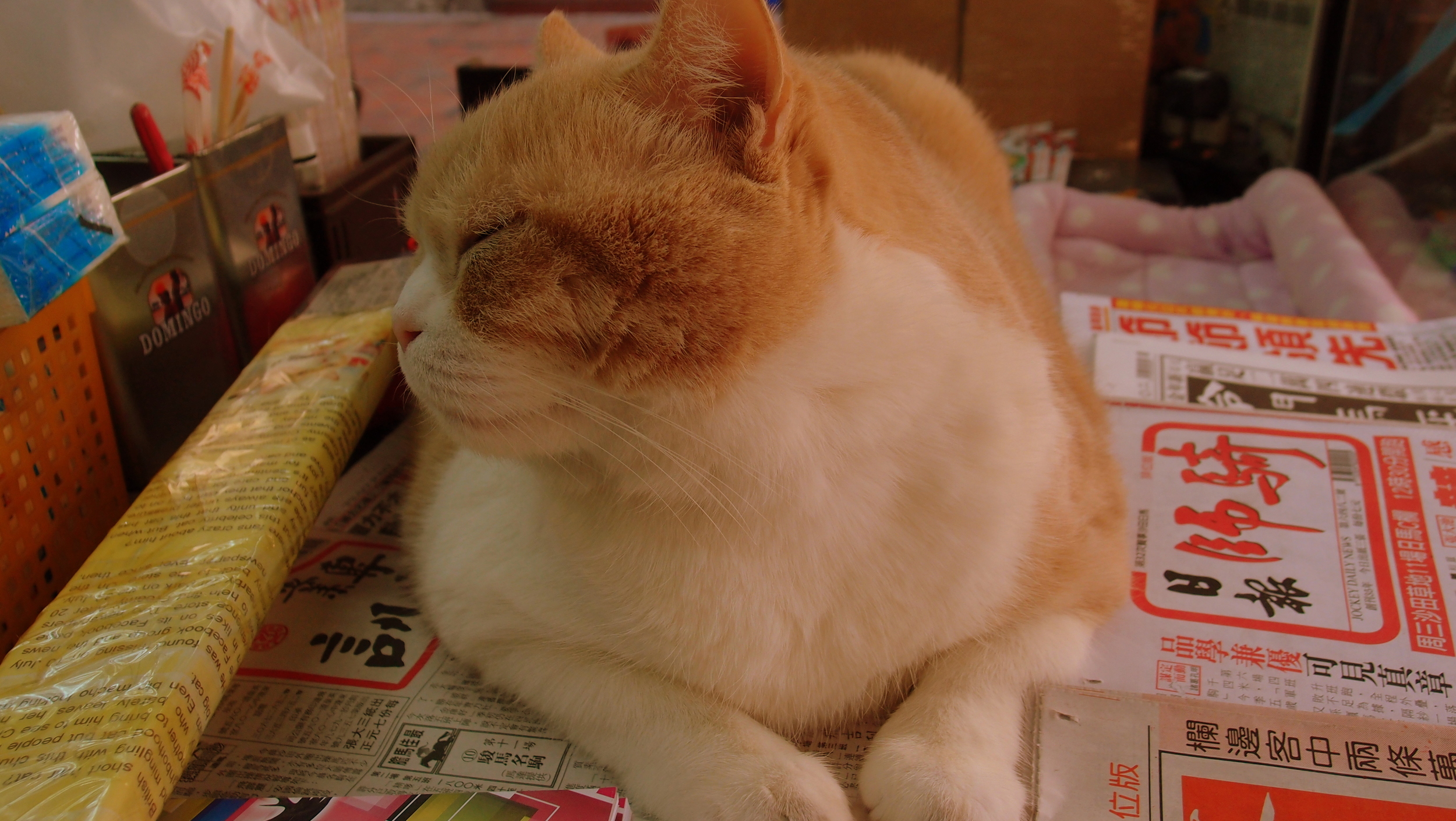 Meet Brother Creamy, this cat is a minor legend in Hong Kong, he has been on TV, posed with stars and generally laps up the attention. He is one fat cat and I love him. He resides at a little corner shop near the Hotel Icon.