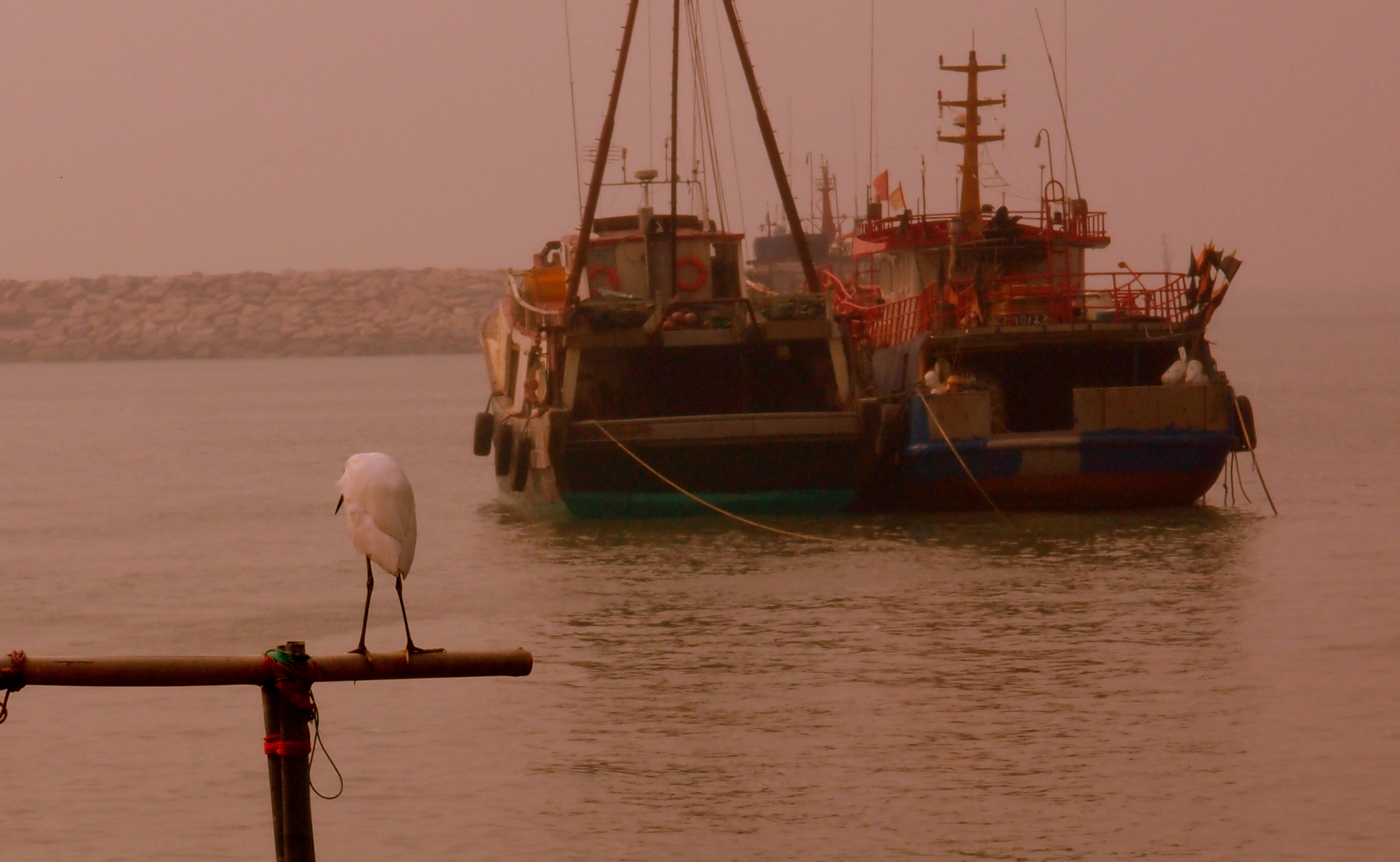 This bird is perhaps looking for lunch or just chilling at a rather hazy Tai O Fishing Village