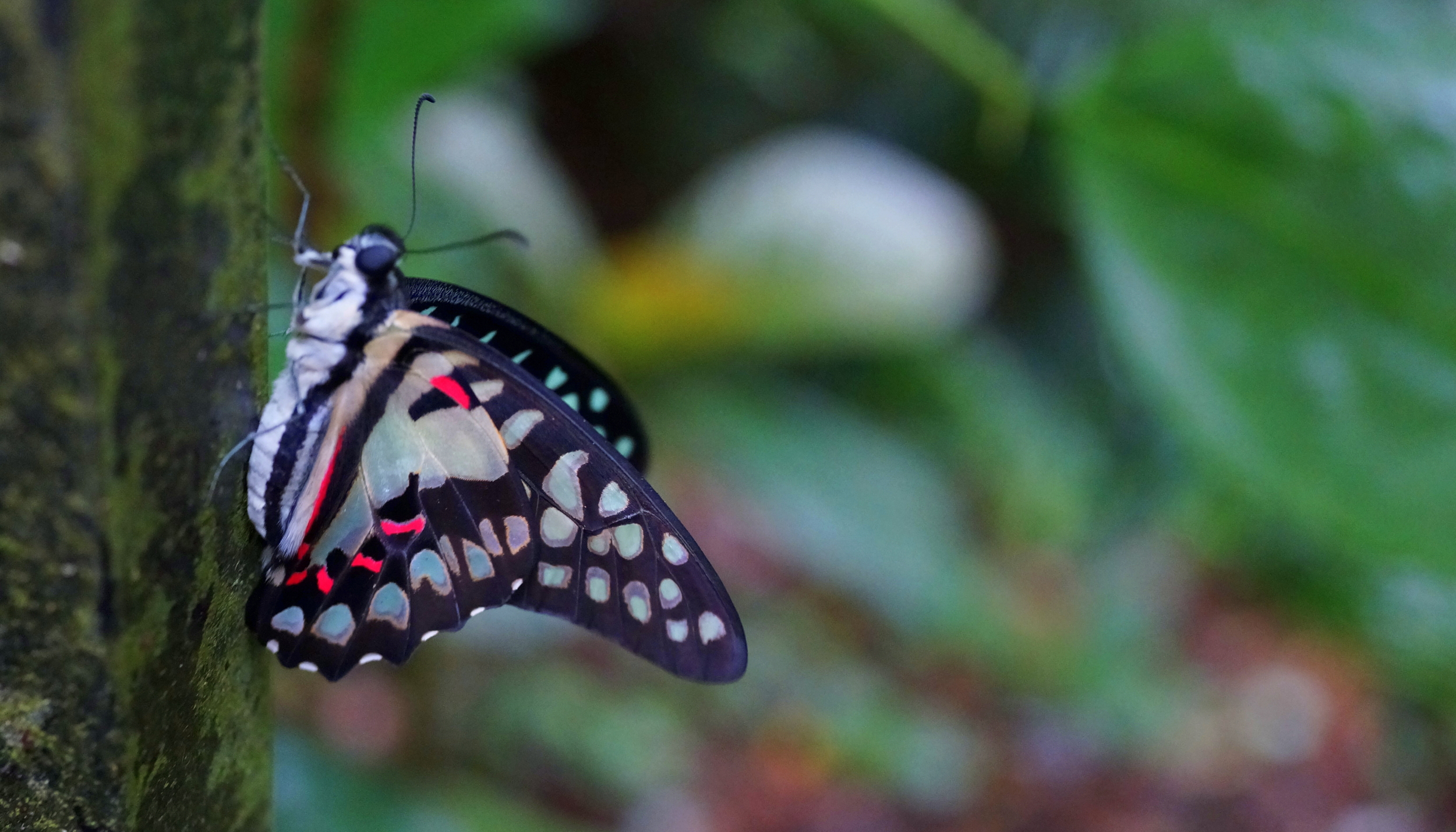 For me anyway, a rare butterfly shot