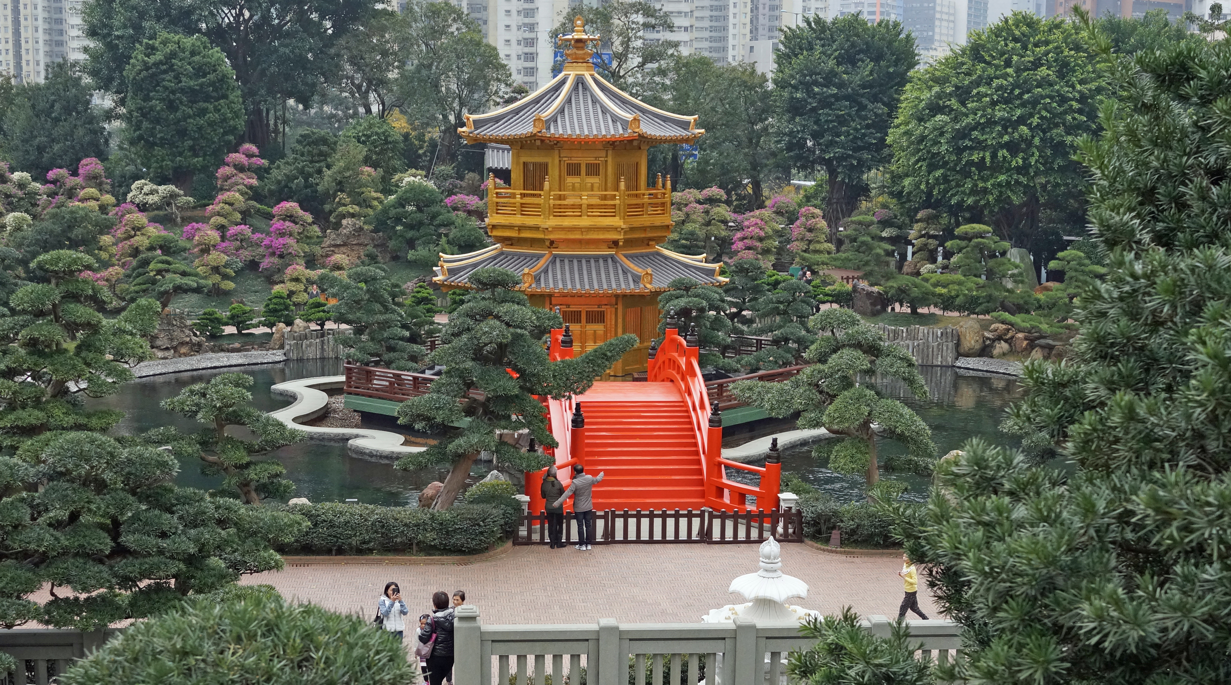 A beautiful oasis in Diamond Hill, the wonderful Nan Lian Gardens.