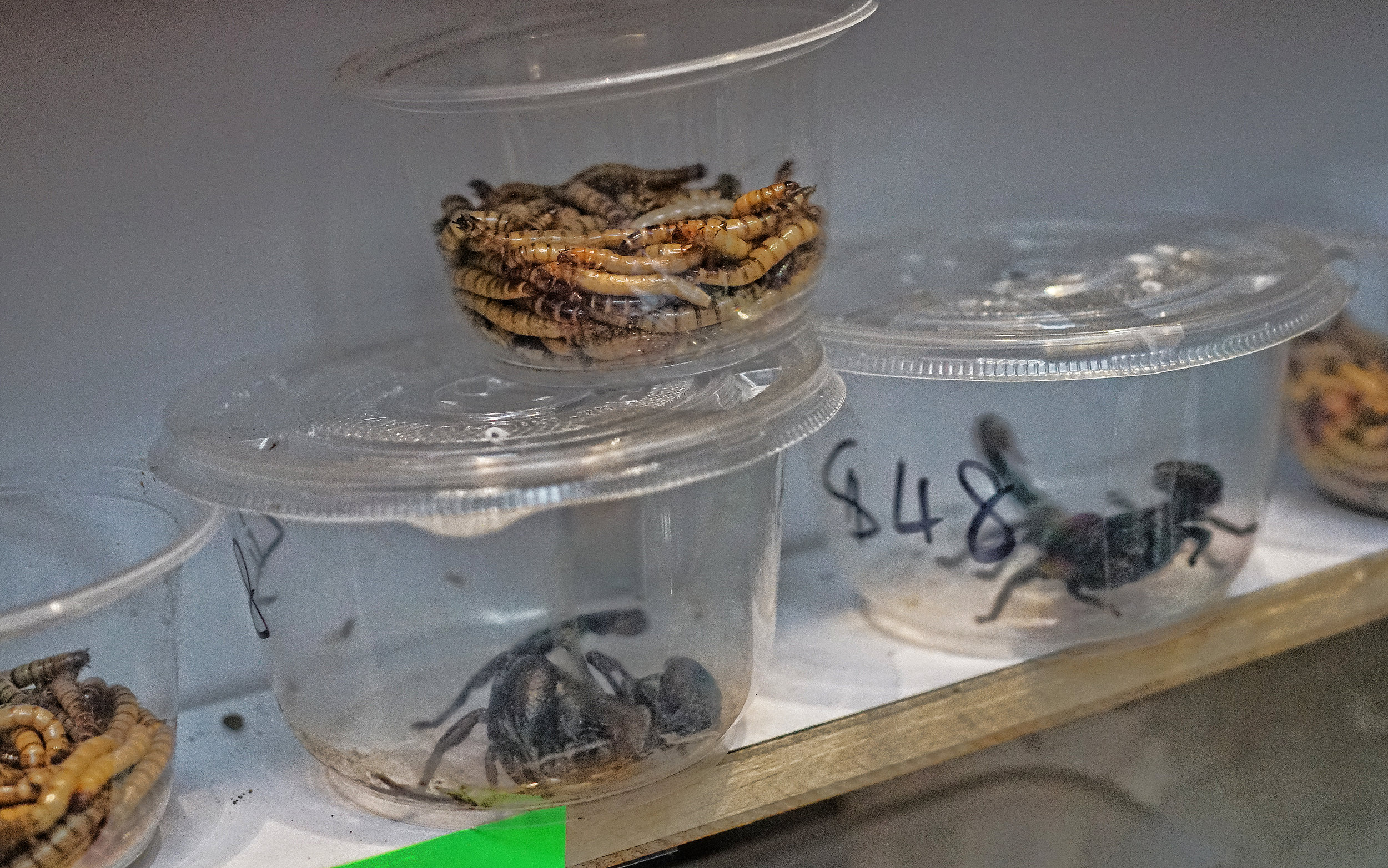 Over the years the Goldfish Market has morphed into more of a Pet Market and there are all sorts of weird things on display like these scary scorpions!! -