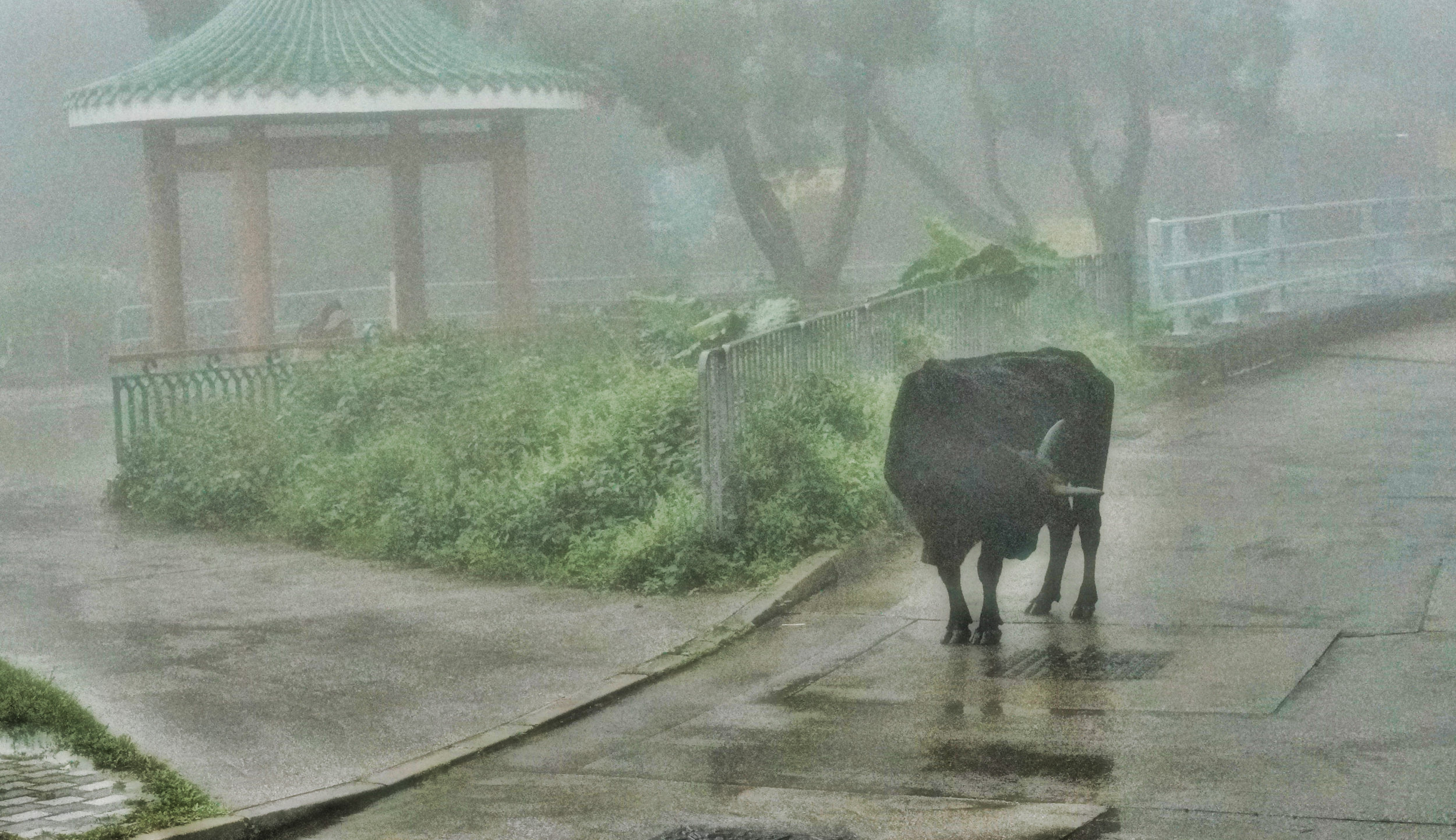 It can get quite mystical up at the Big Buddha on Lantau Island, there are days were you cannot see 2 feet in front of you and all of a sudden you are confronted by a..... cow! The cows are friendly enough mind.