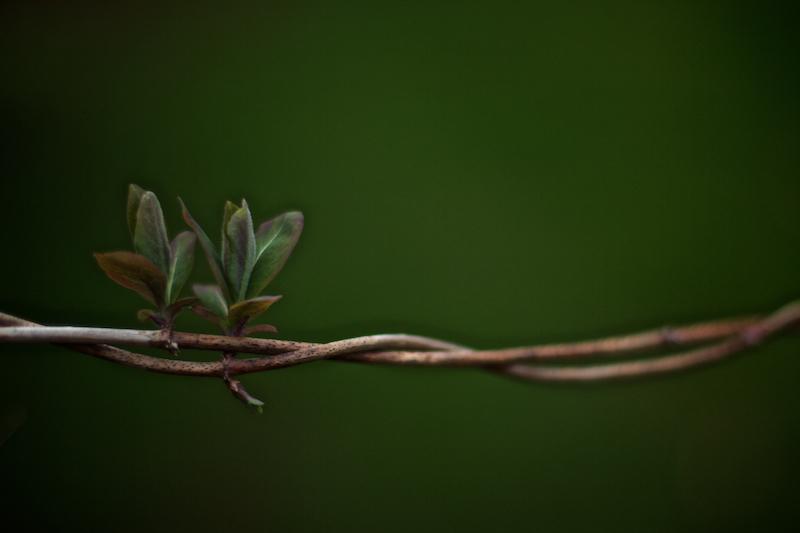 Nature & Still life 012.jpg