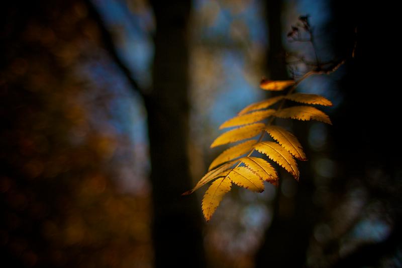 Nature & Still life 022.jpg