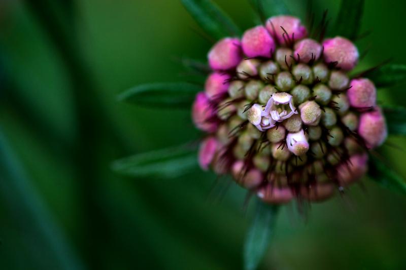 Nature & Still life 025.jpg
