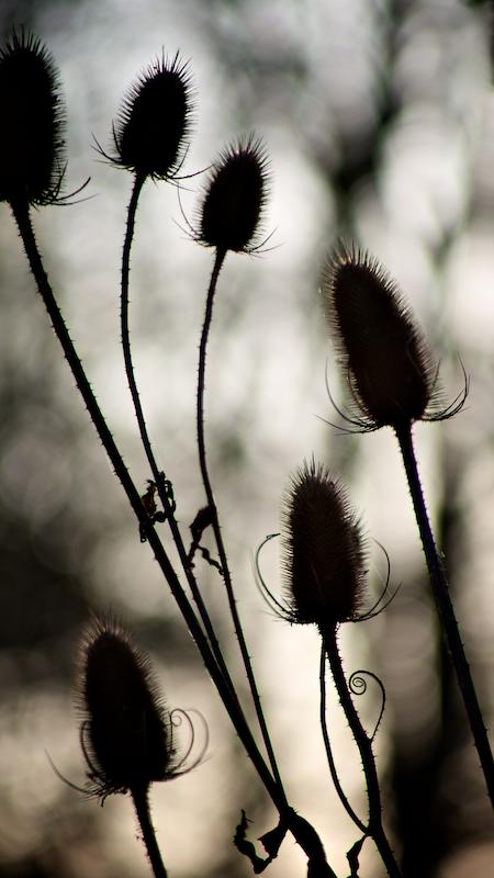 Nature & Still life 031.jpg