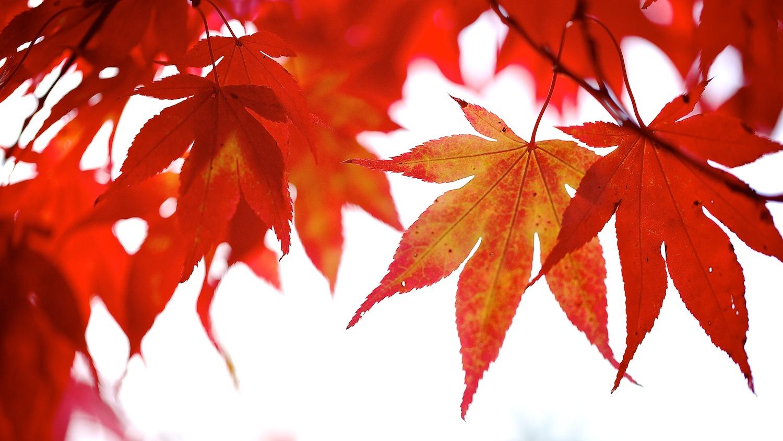 Leaves 014.jpg