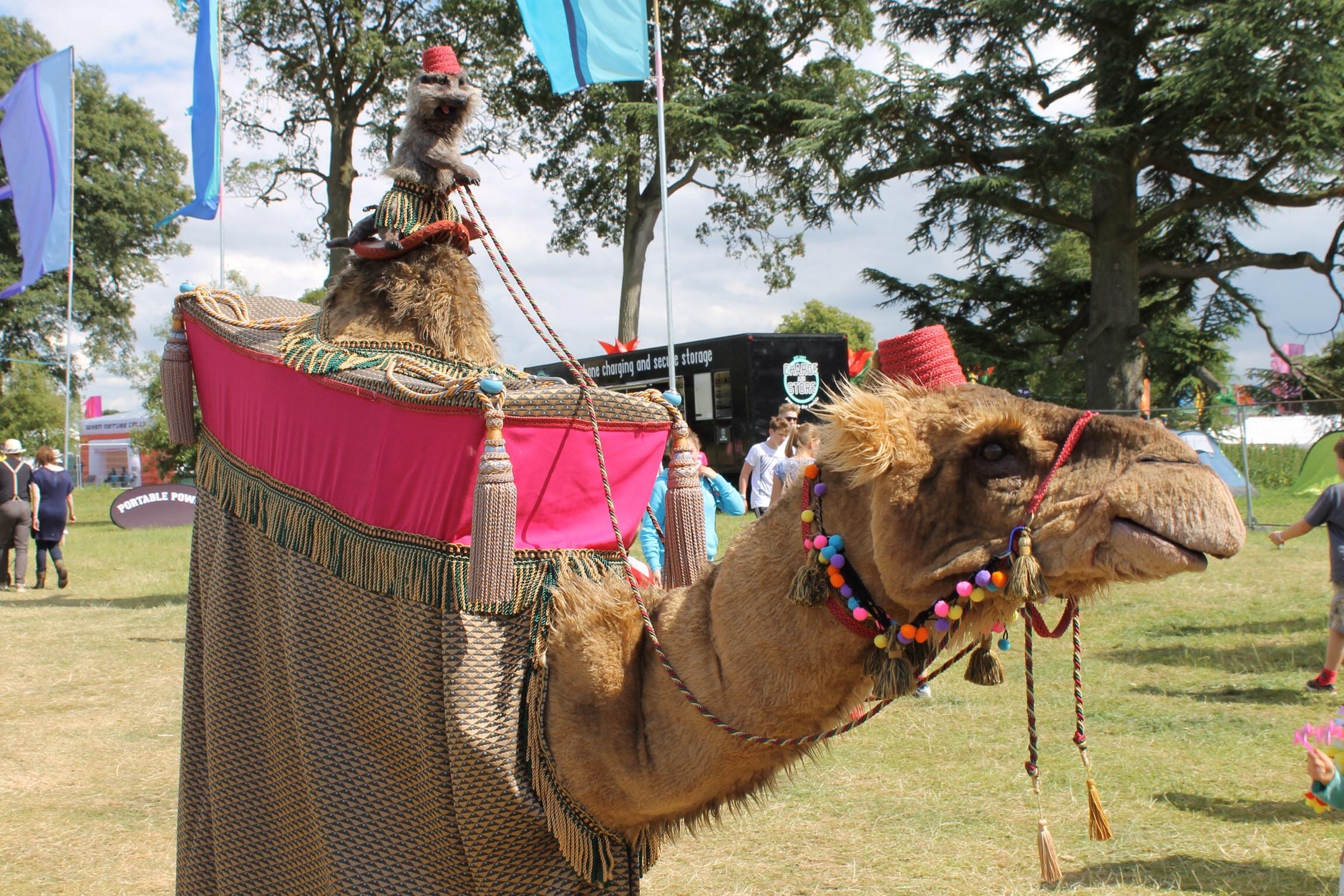Meerkat & Camel