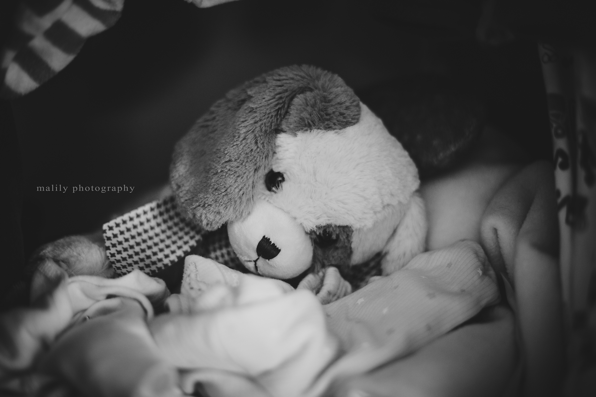 malily photography | auburn newborn photographer