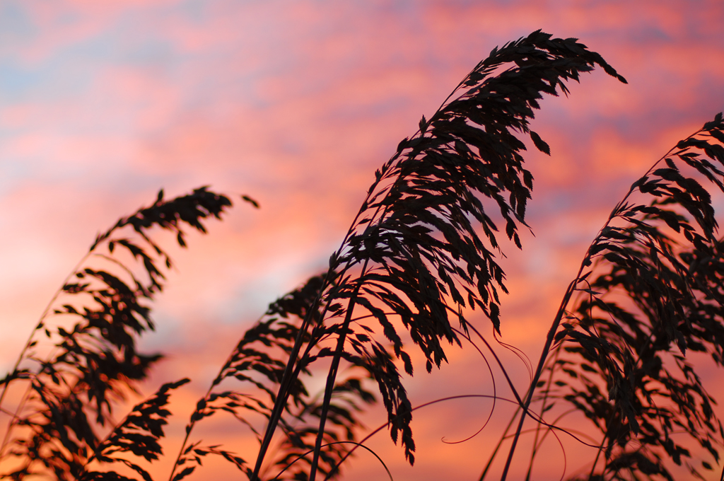 Sunset Sea Oats on Isle Of Palms.jpg