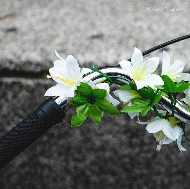 """🎼""""Primavera cero🎶🎵🎵🎶 Buena semana."""