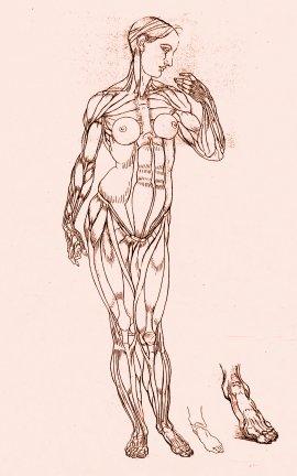 ps an Nausicaa1M.jpg