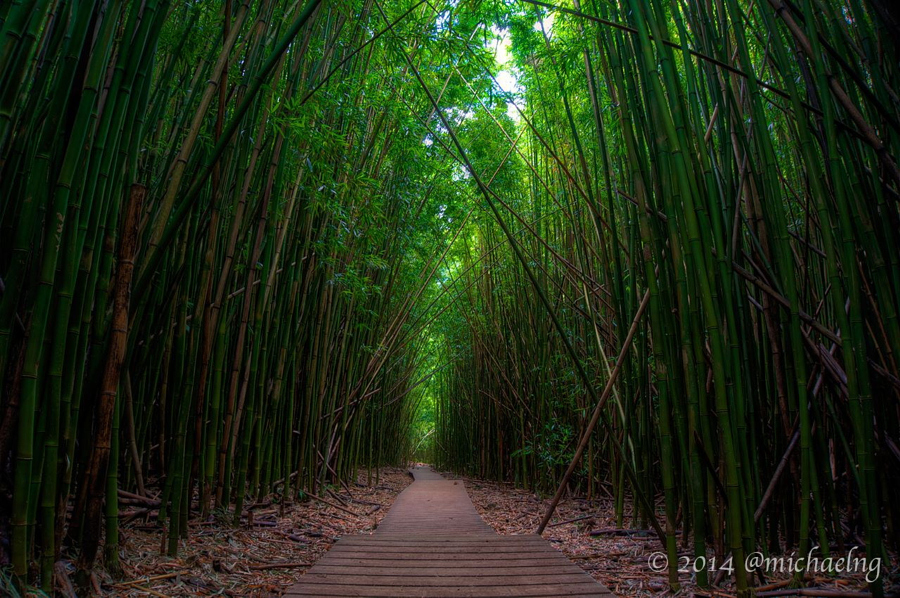 The Bamboo Forest along the Pipiwai Trail