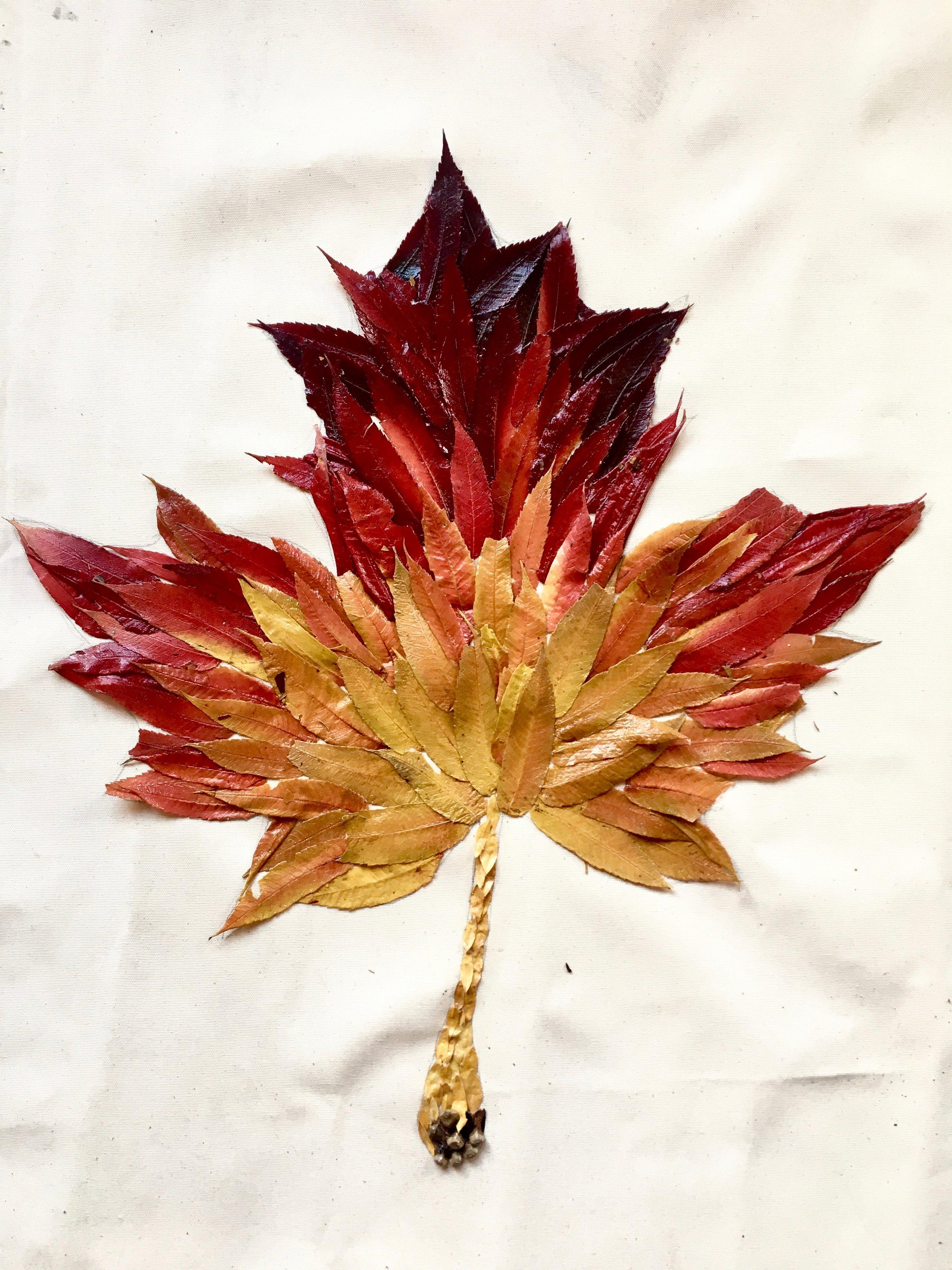leaf1 2.jpg